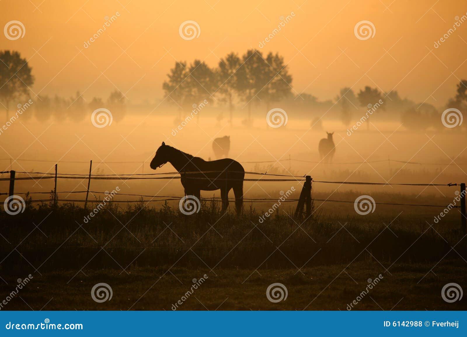 Paard in ochtendmist