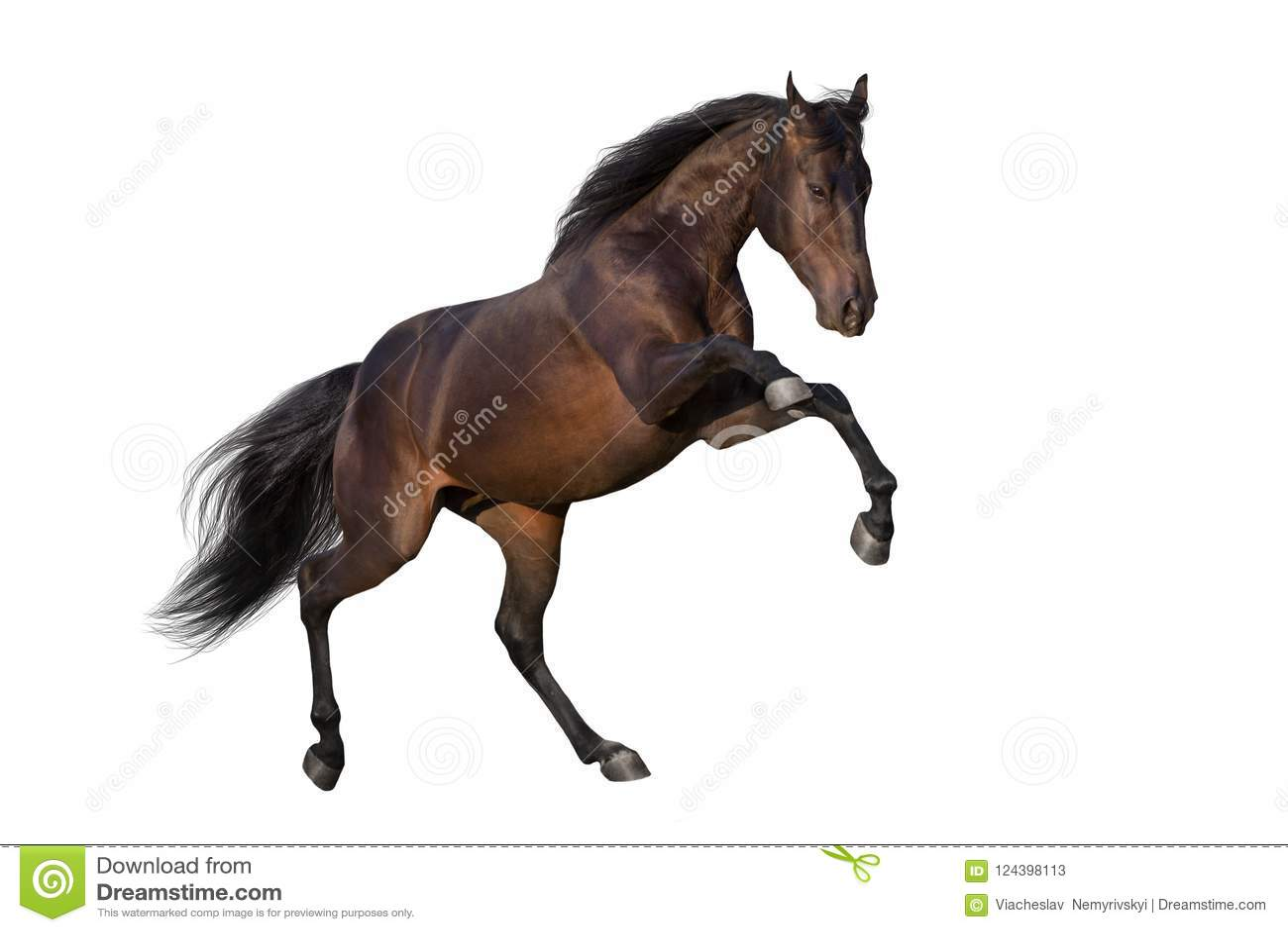 Paard omhoog geïsoleerd grootbrengen