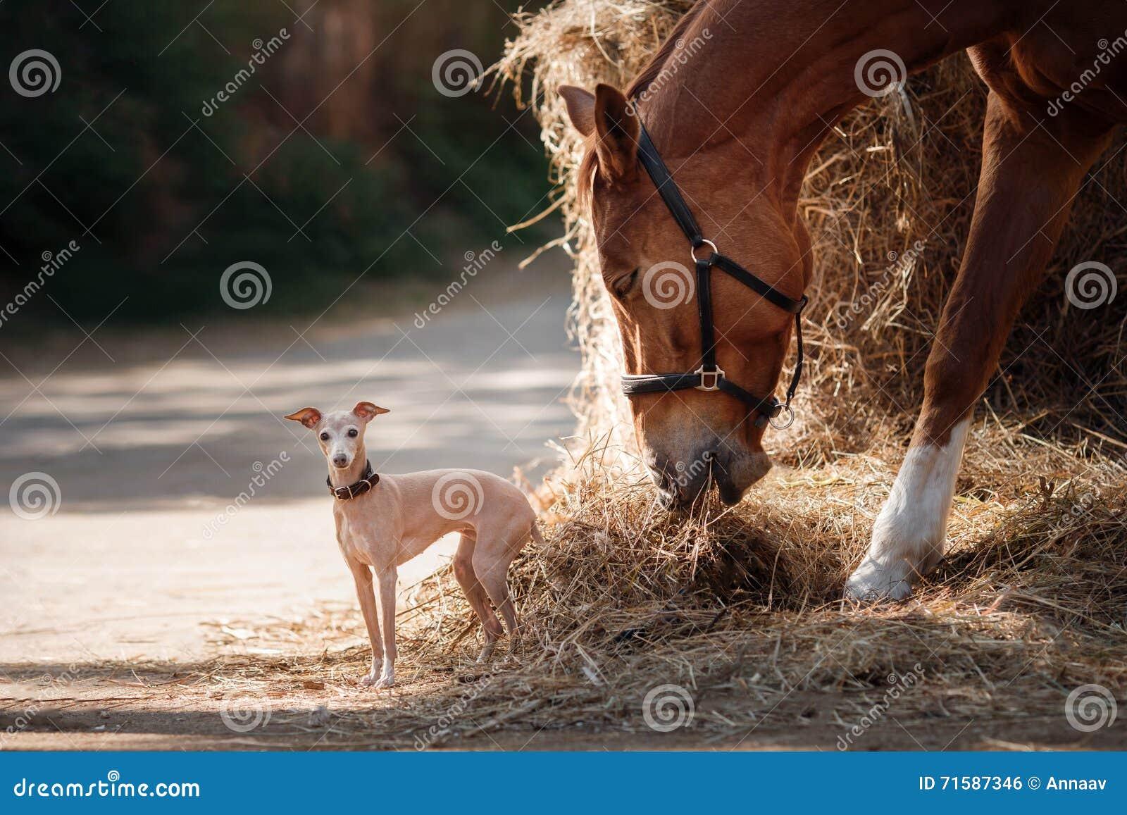 Paard op aard Het portret van een paard, bruin paard, paard bevindt zich in de paddock