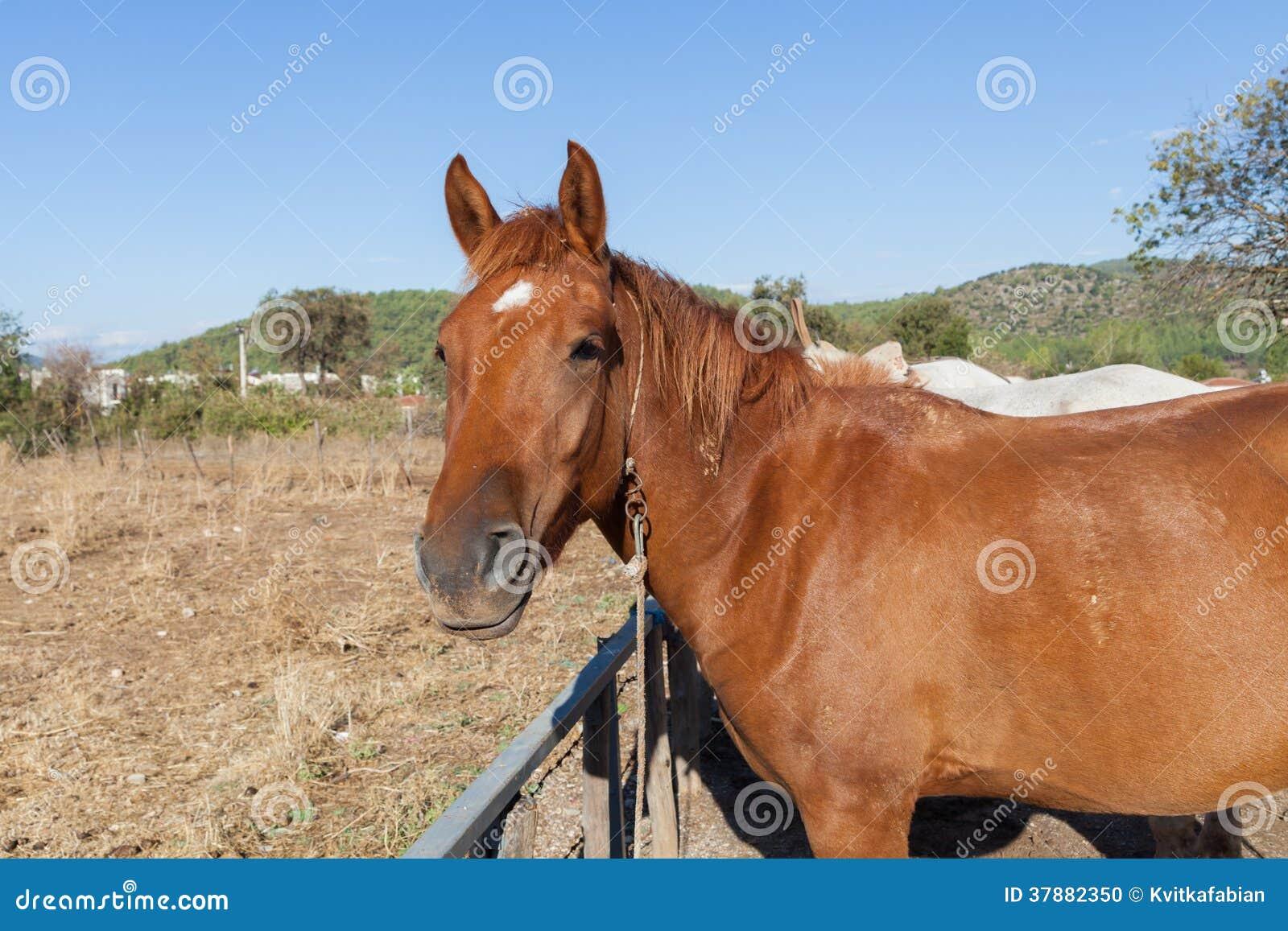 Paard op het landbouwbedrijf