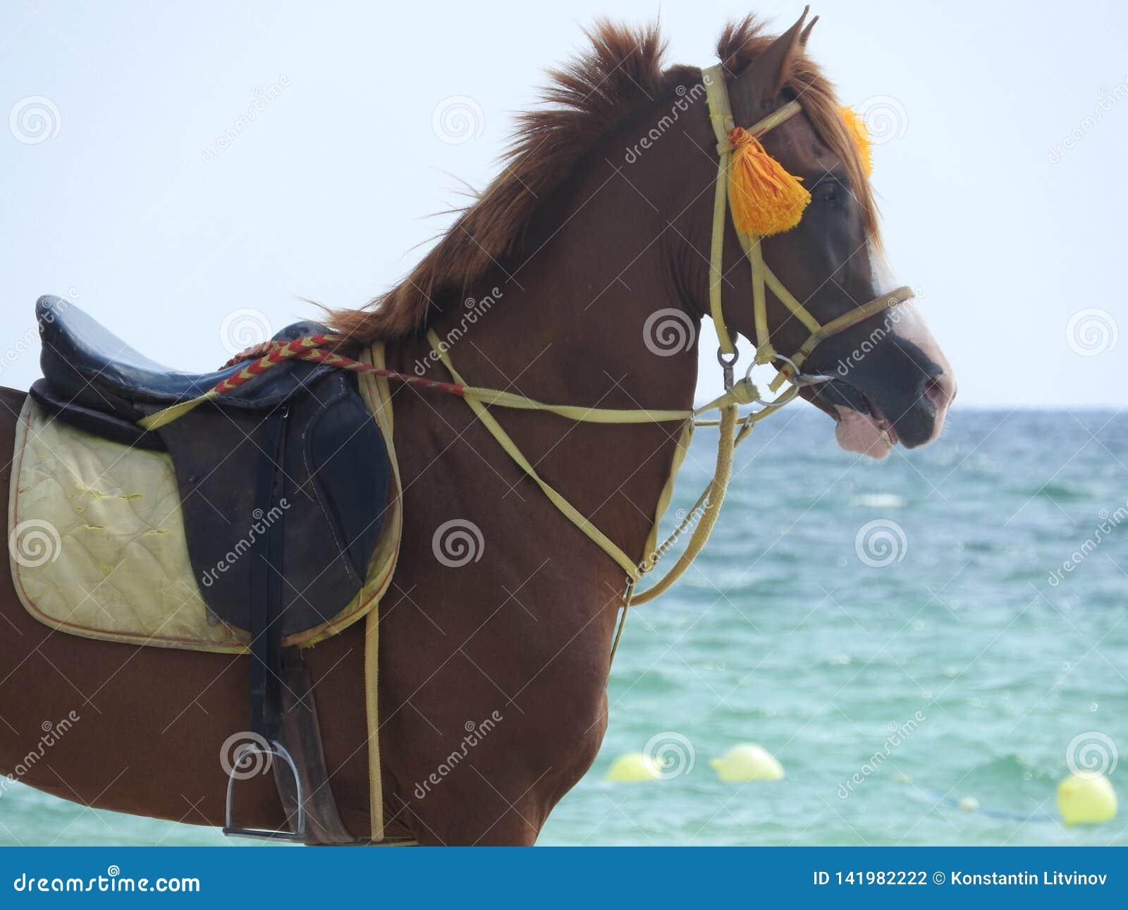 Paard op het strand in Tunesië, Afrika op een duidelijke dag tegen het blauwe overzees