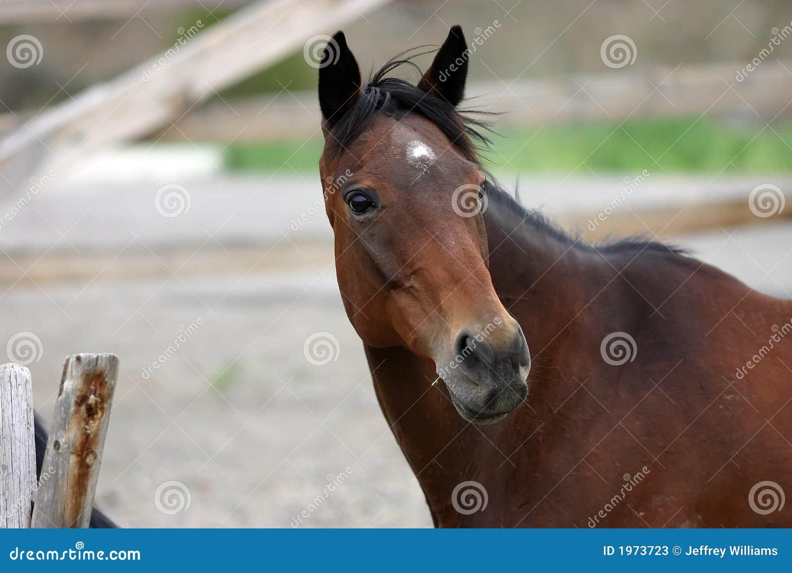 Paard op Landbouwbedrijf