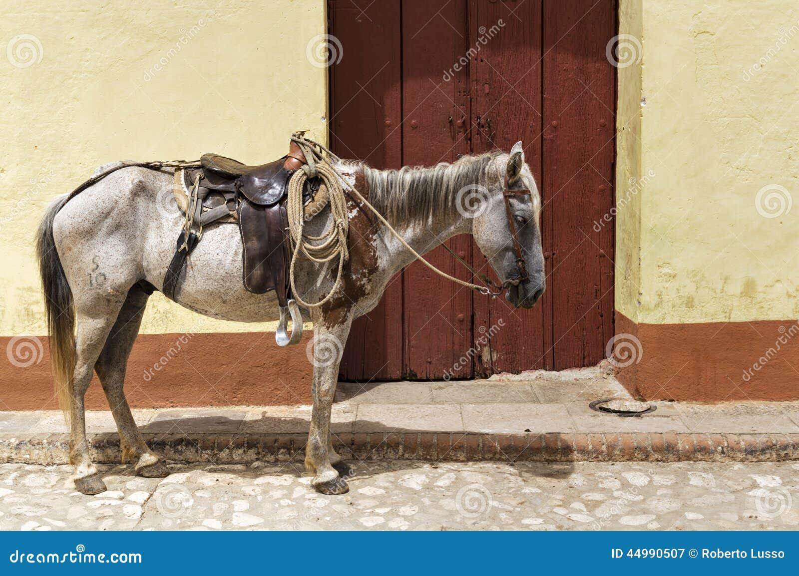 Paard in Trinidad, Cuba