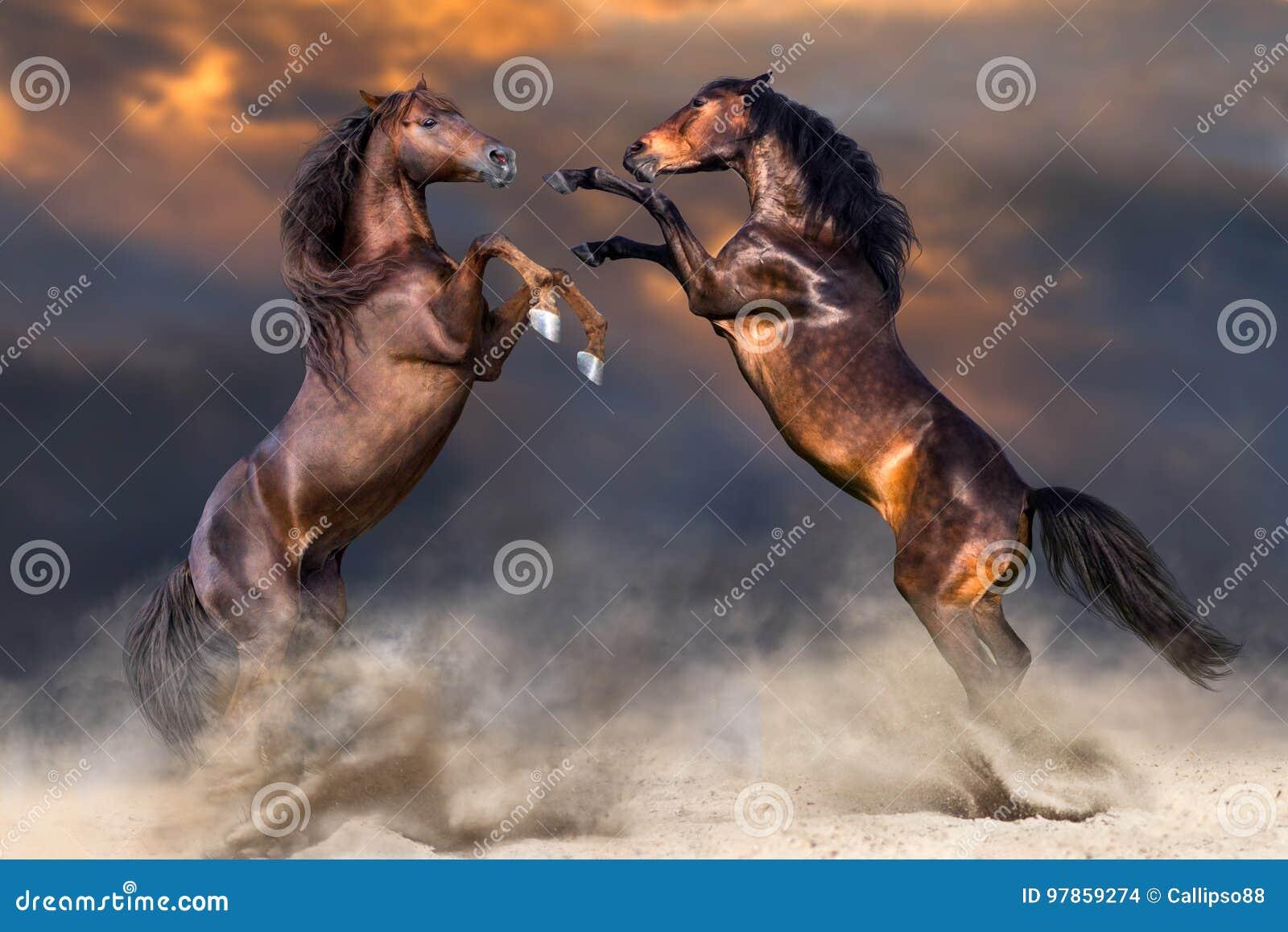 Paard twee die omhoog grootbrengen