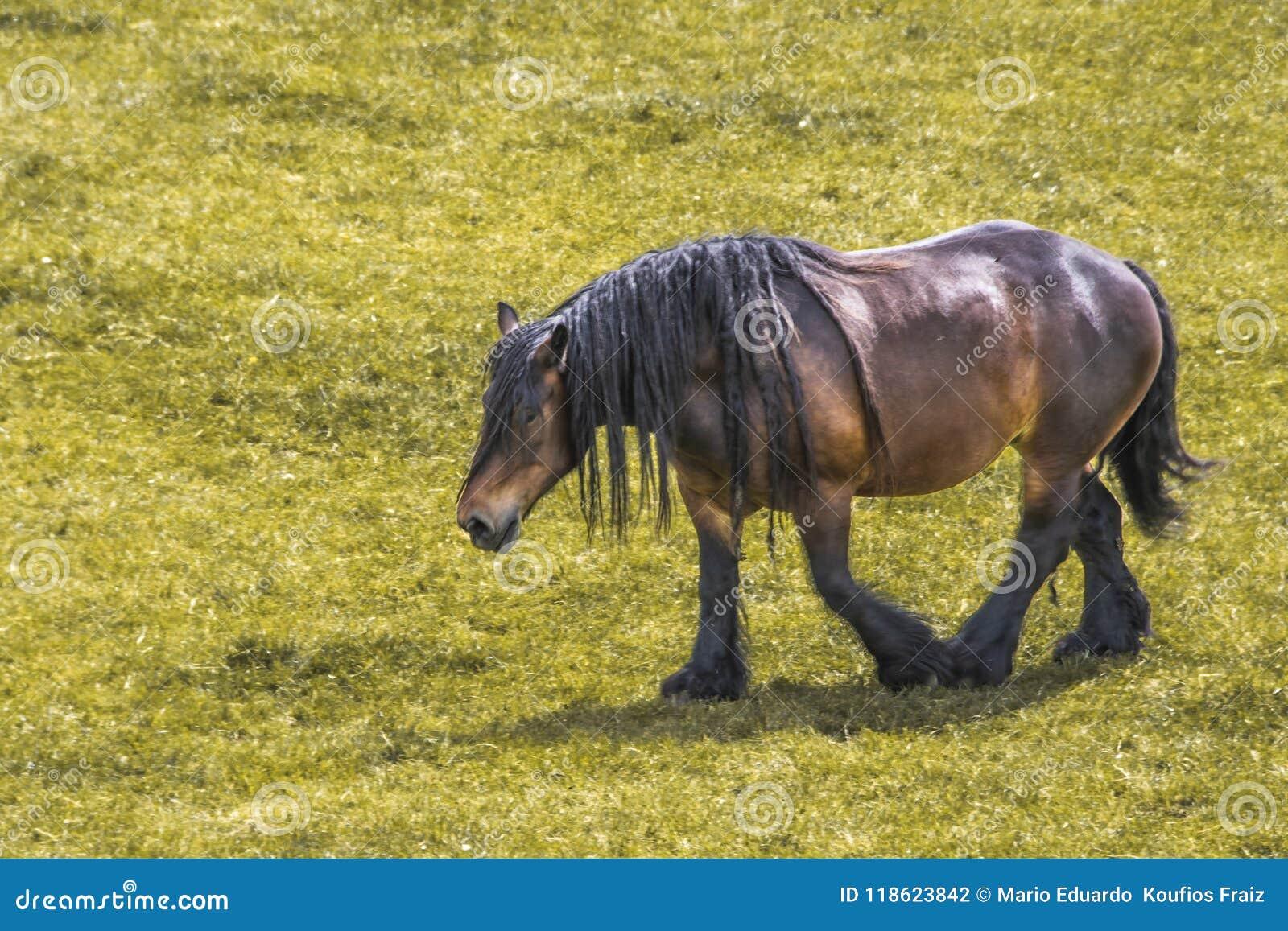 Paard van schrijver uit de klassieke oudheid die in de landbouwbedrijven van Nederland schieten