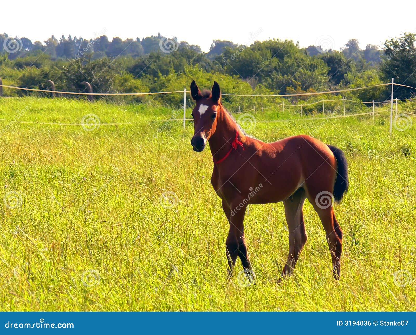 Paard - veulen