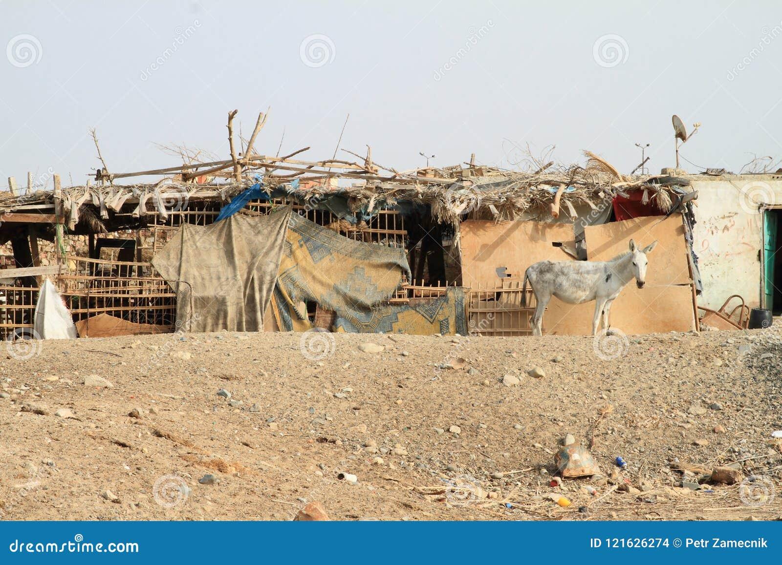 Paard voor krottenwijk