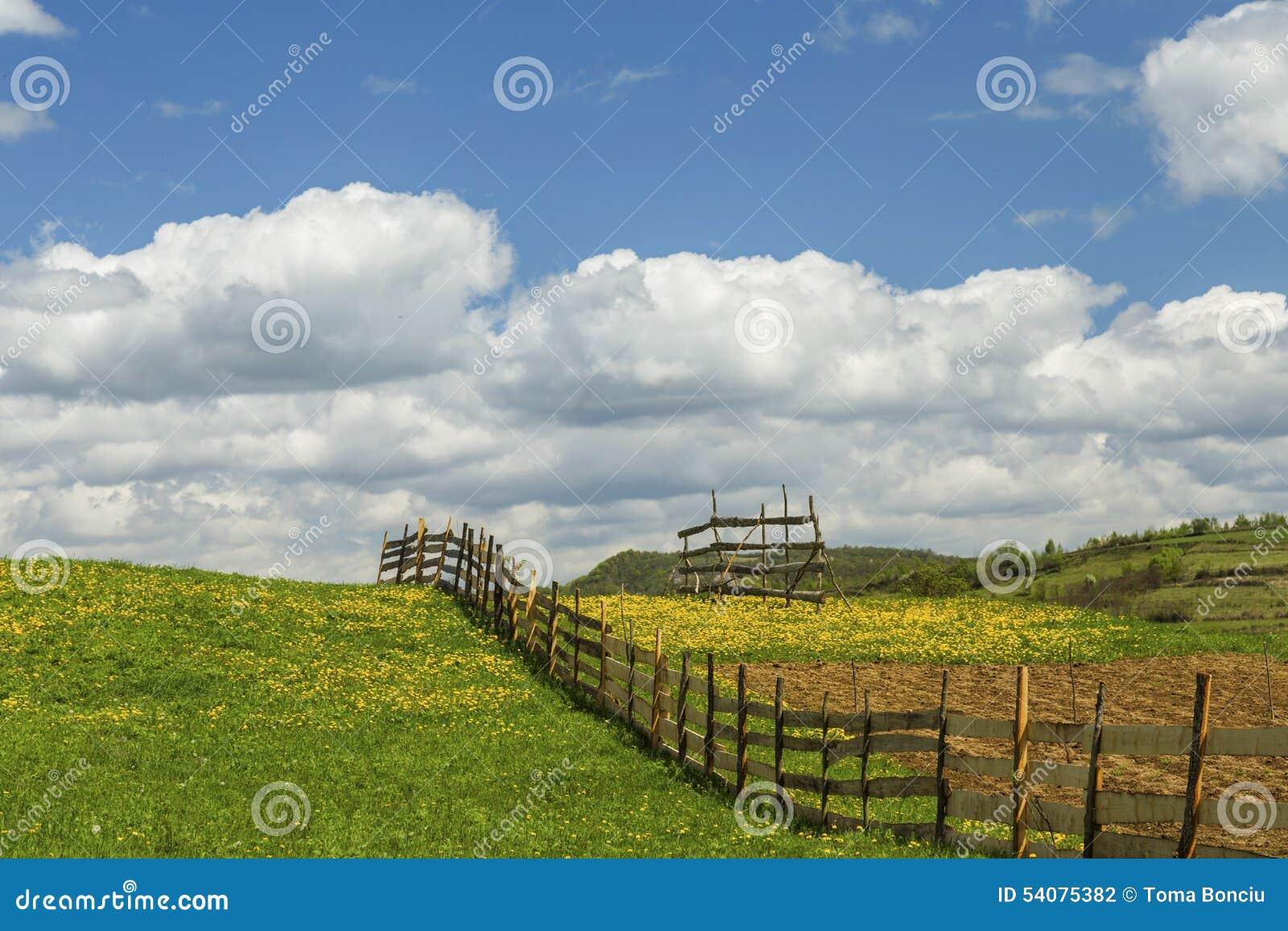 Paardebloemlandschap