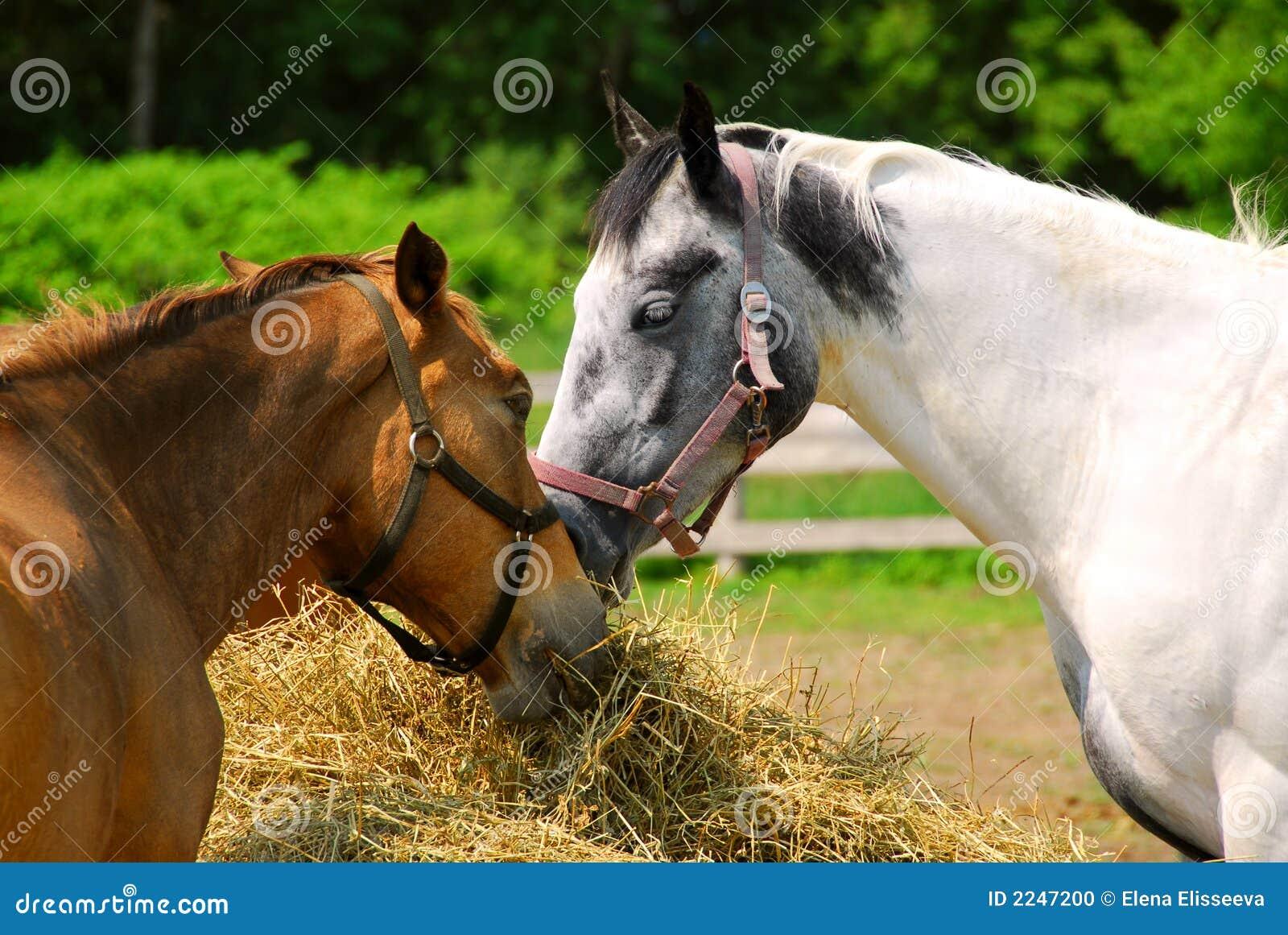 Paarden bij de boerderij