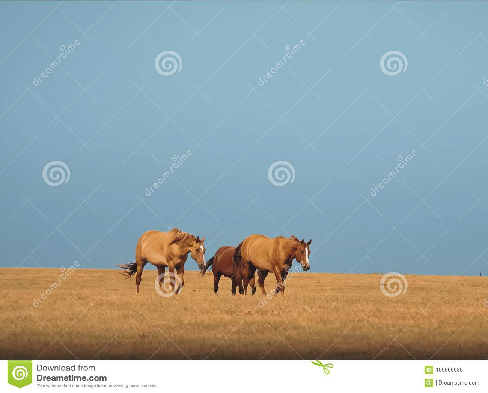 Paarden in de paarden steppe Een kleine kudde van paarden op een gebied