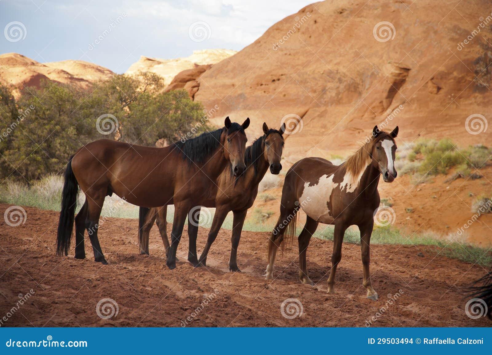 Paarden in de Vallei van het Monument, Arizona, de V.S.