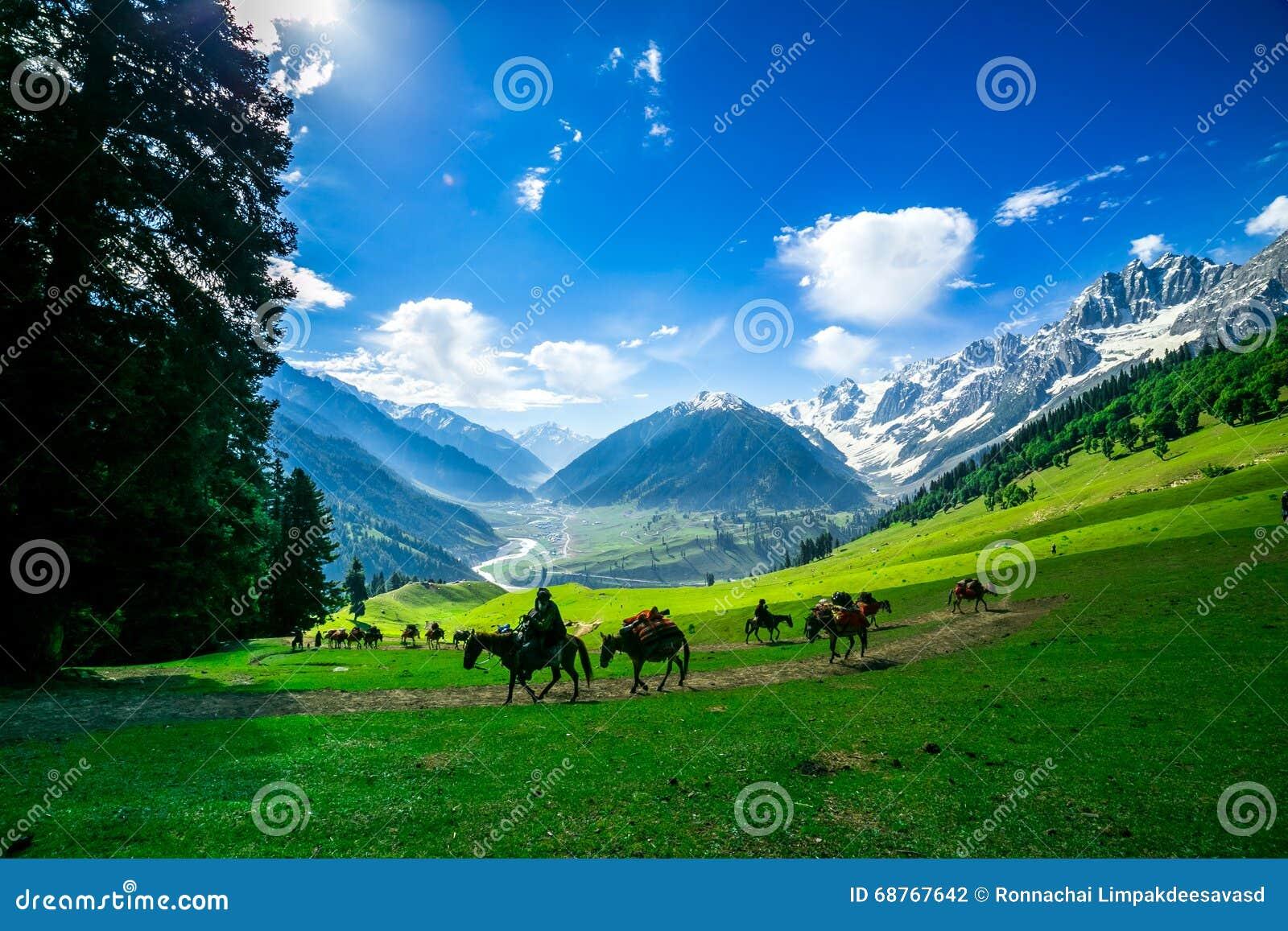 Paarden die op een Heuvel, Kashmir weiden