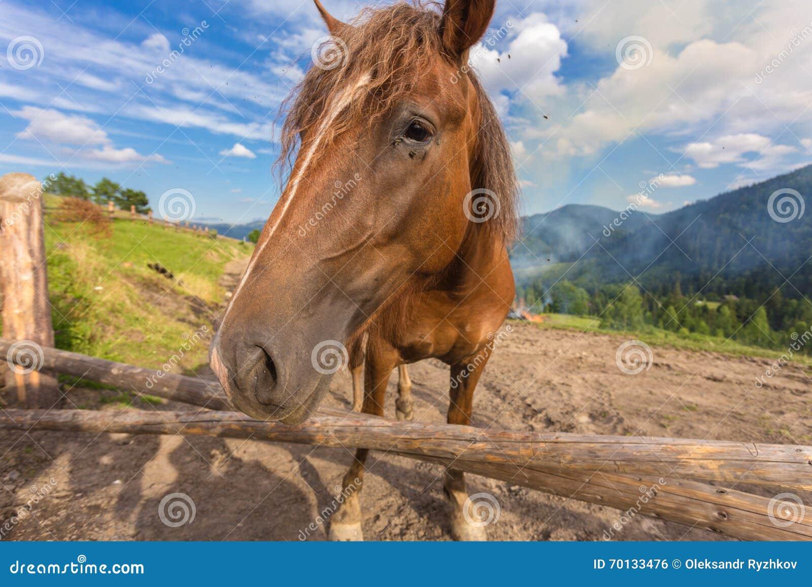 Paarden, die op gras bij hoogland Karpatisch weiland voeden