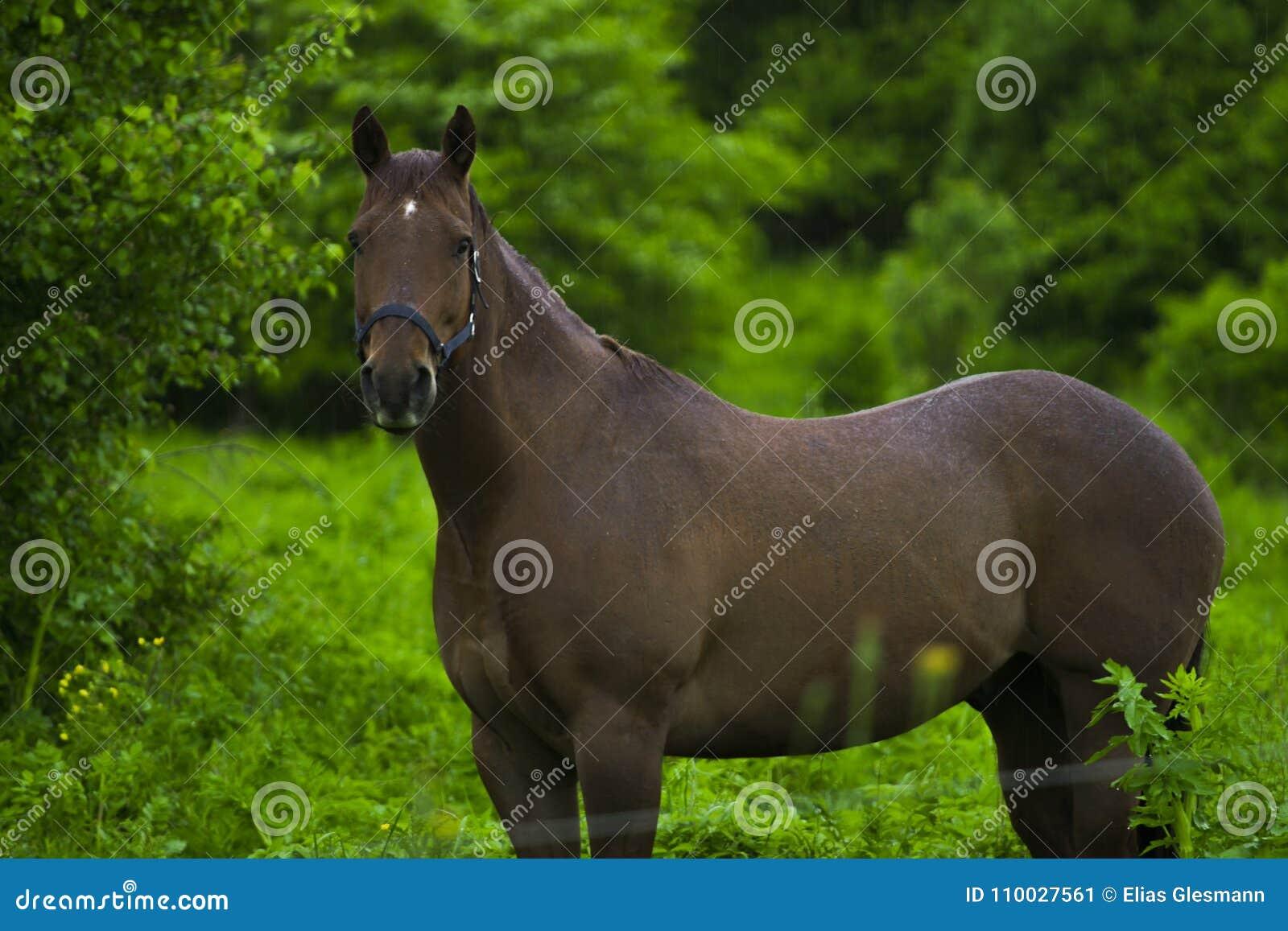 Paarden die zich in de regen bevinden