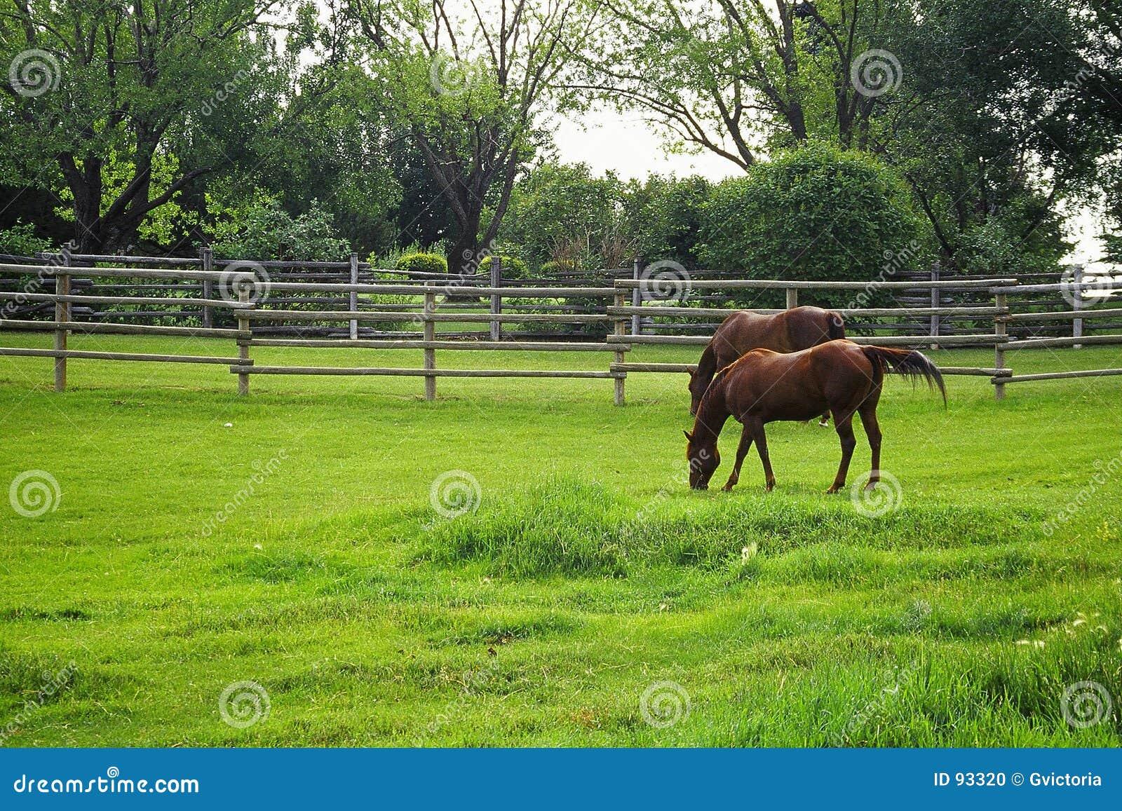 Paarden het weiden