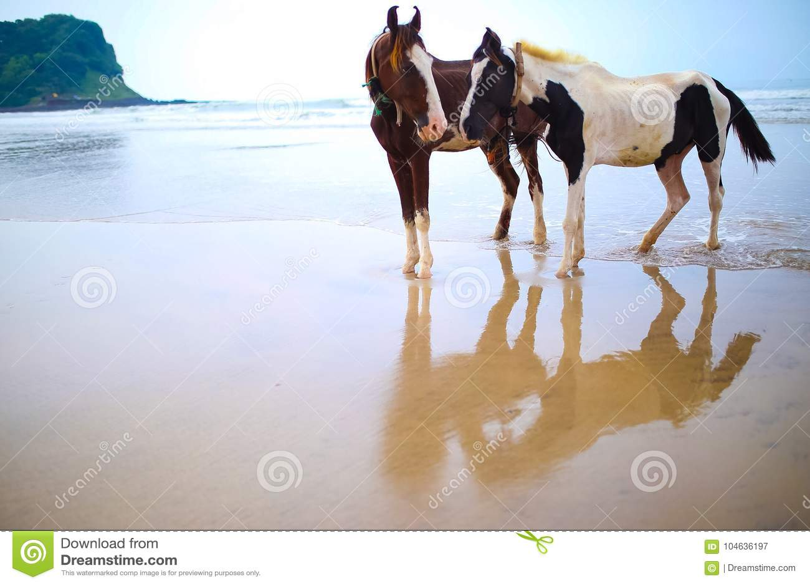 Download Paarden in Liefde stock afbeelding. Afbeelding bestaande uit golven - 104636197