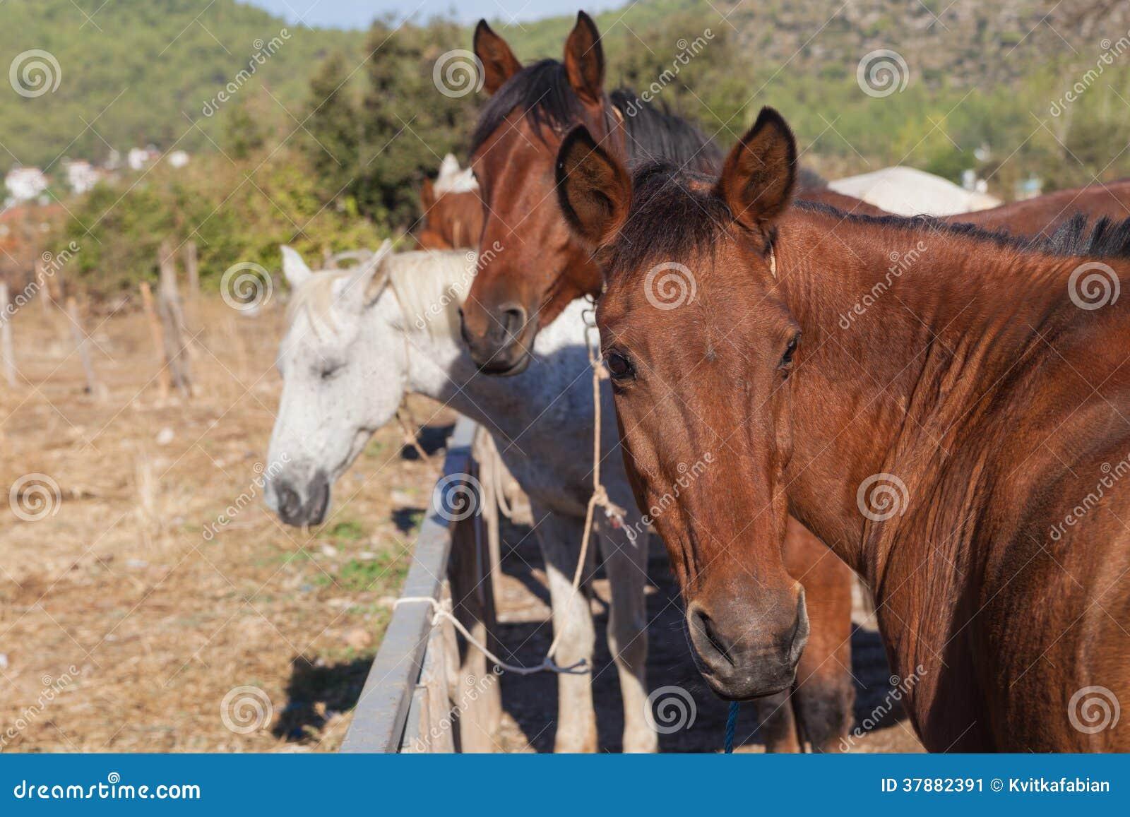 Paarden op het landbouwbedrijf