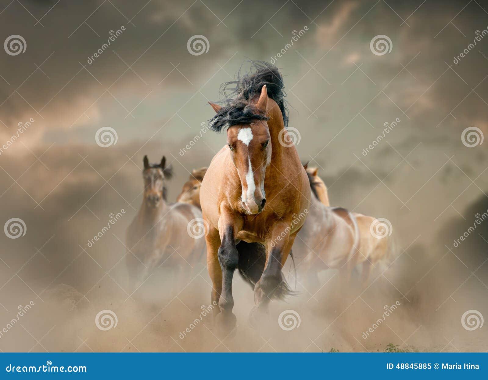 Paarden in stof