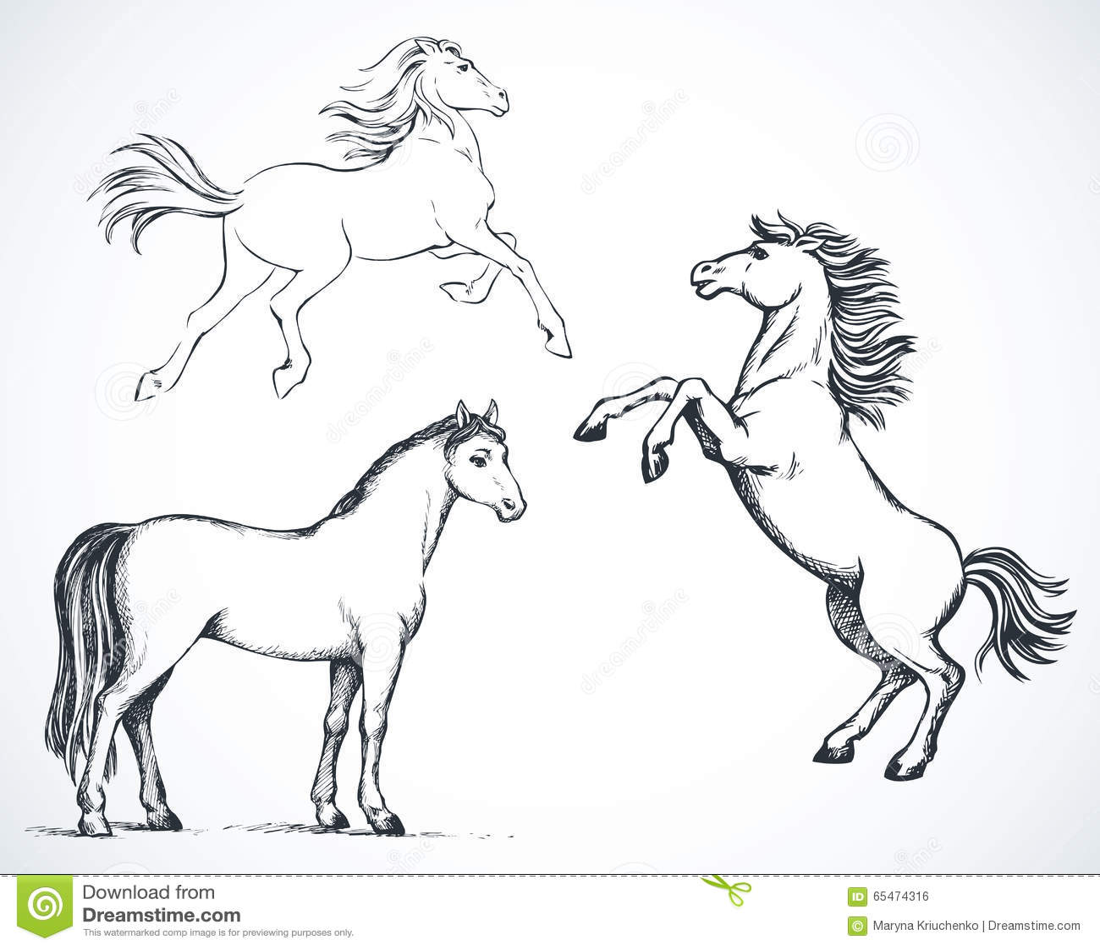 Paarden Vector Tekening Vector Illustratie Illustratie
