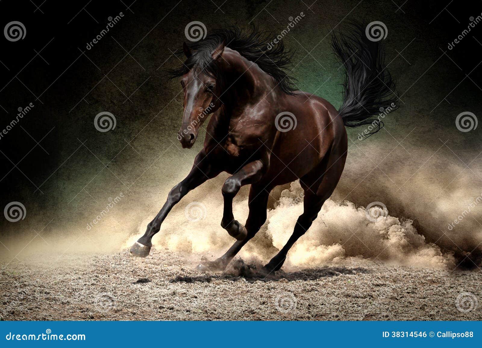 Paardgalop in woestijn