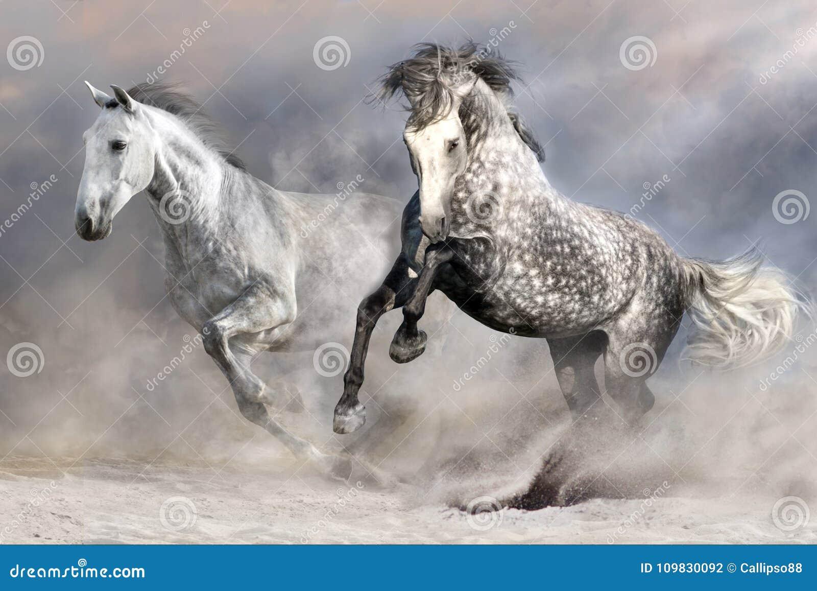 Paardkudde in motie
