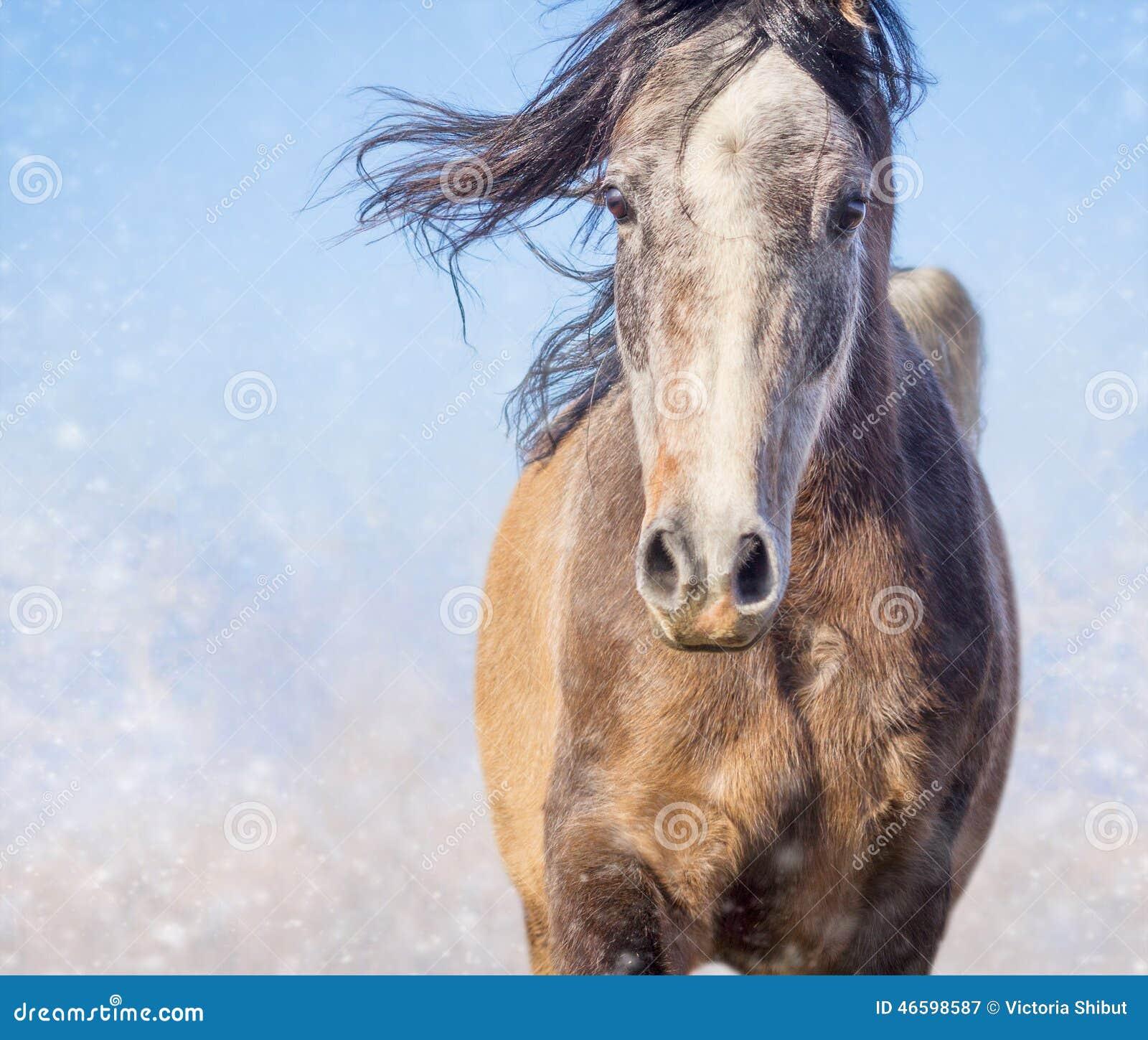 Paardportret met het ontwikkelen van manen op de dag en de sneeuw van de winter