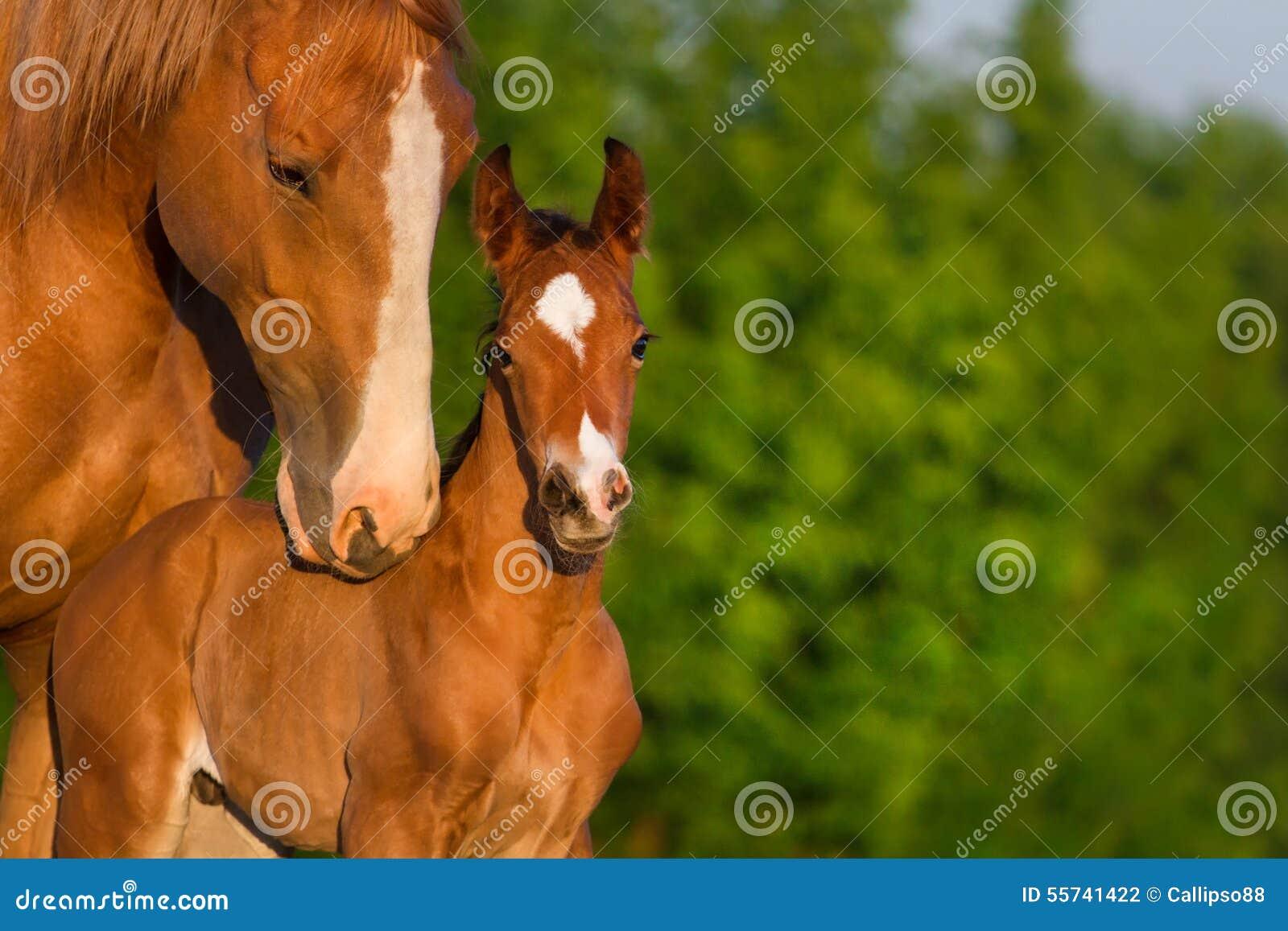 Paardportret met veulen