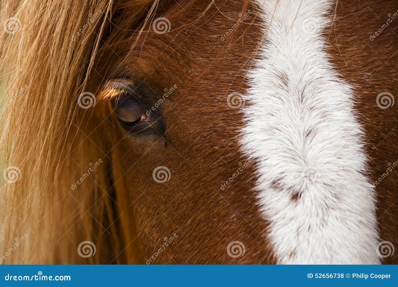 Paardprofiel