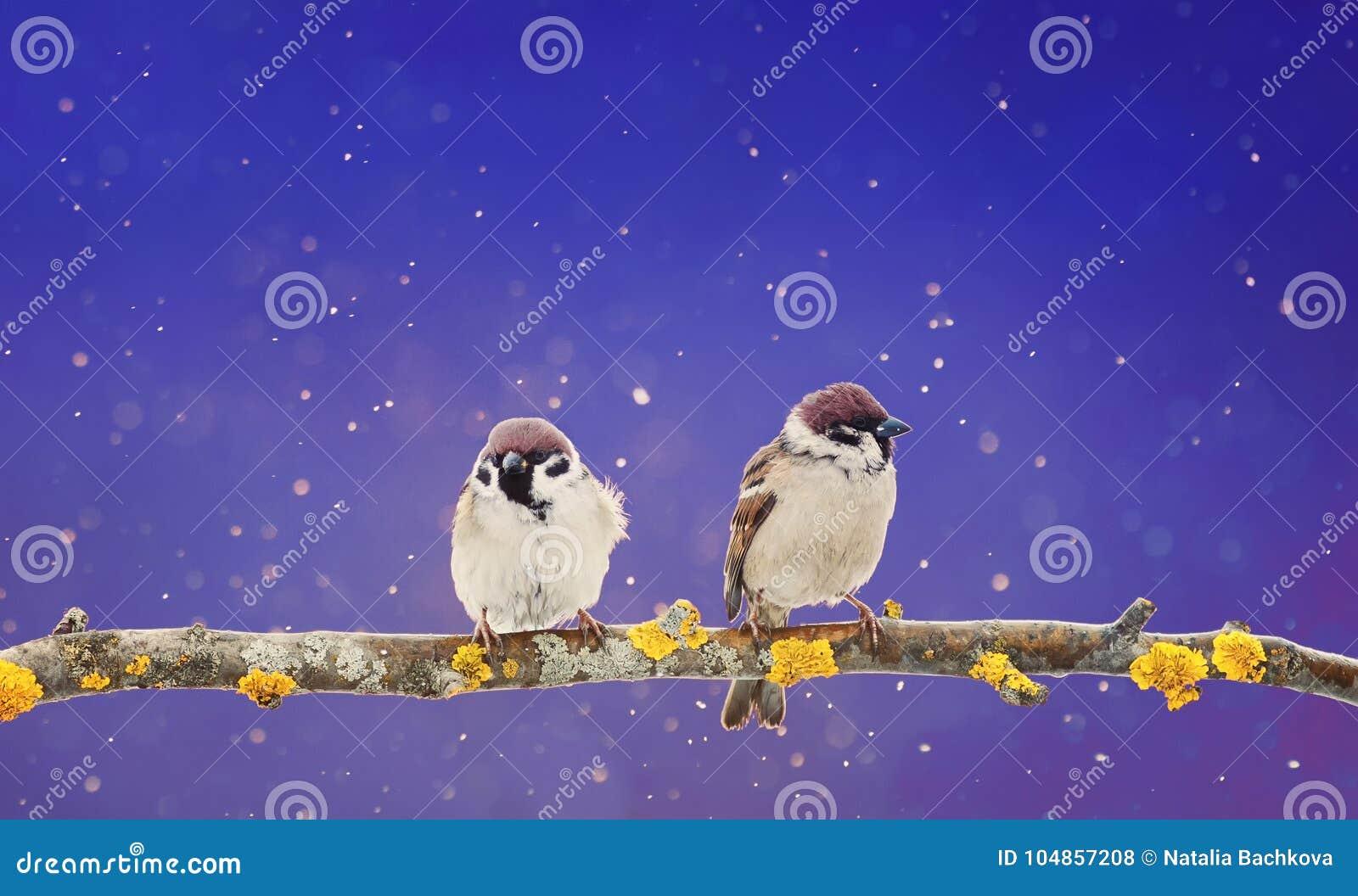 Paare von den netten Vögeln, die auf einer Niederlassung in Winter Weihnachten g sitzen