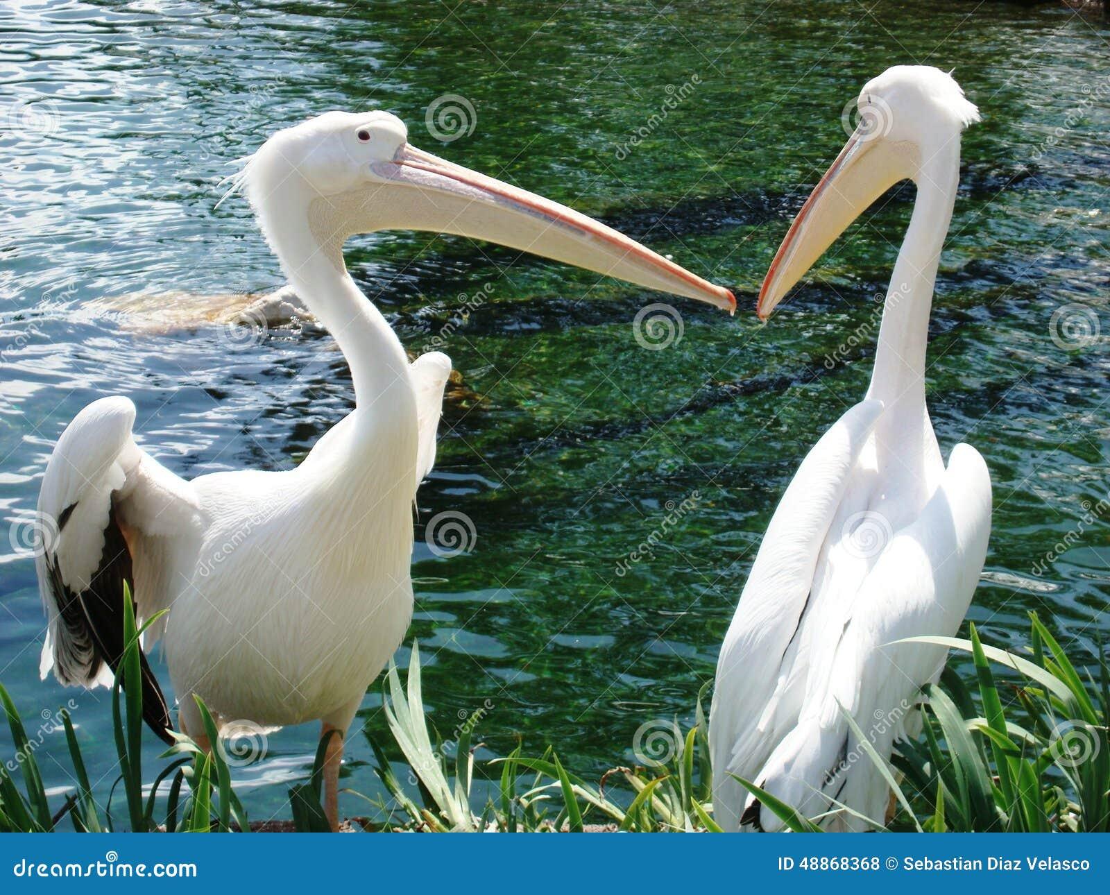 paare vögeln