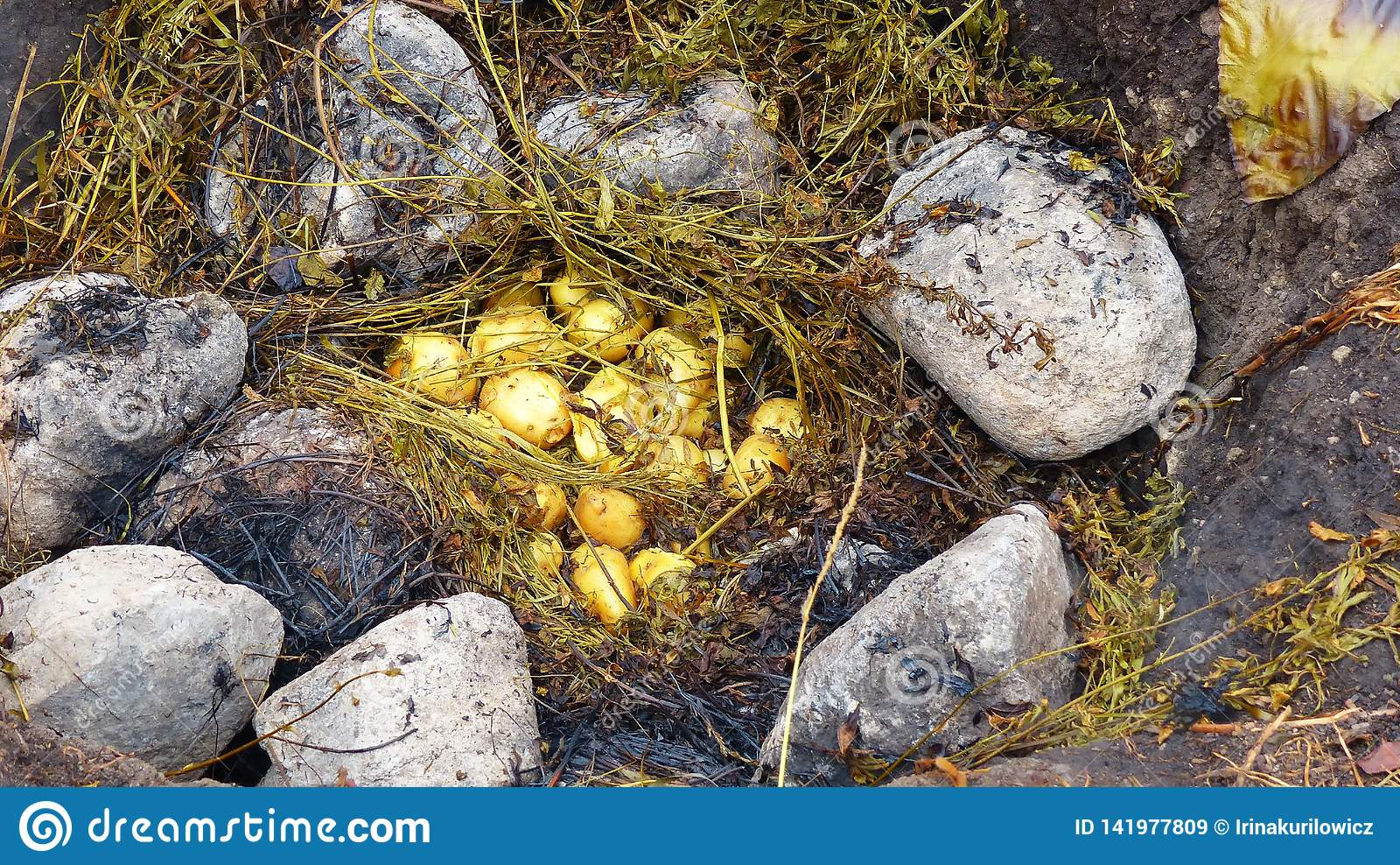 Pachamanca родовой варя подземный процесс на нагретых камнях, эквадор