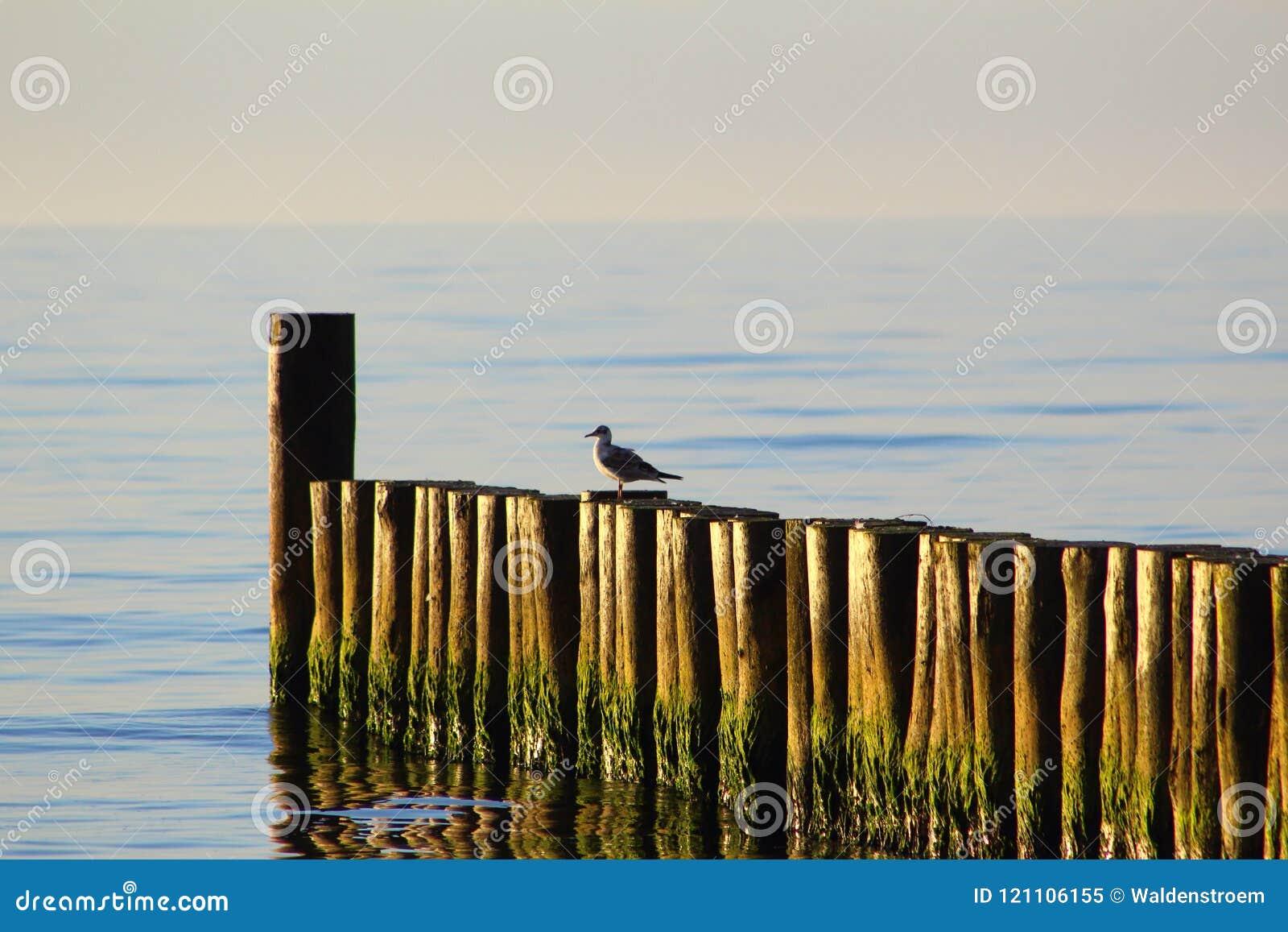 Pachwina przy przy morze bałtyckie plażą ustronia morskie, Poland w wieczór słońcu