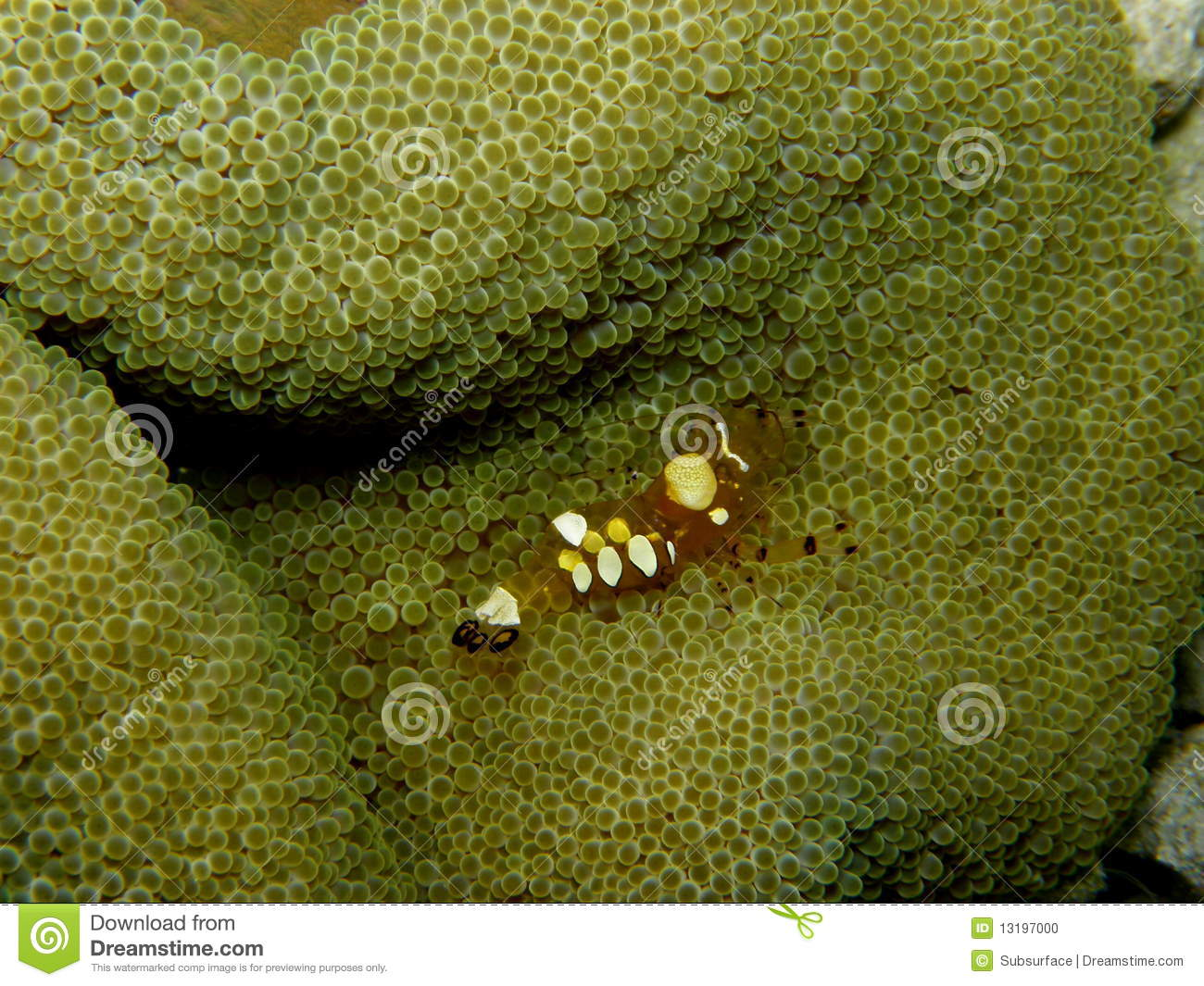 Clown Popcorn Photos Free Royalty Free Stock Photos From Dreamstime