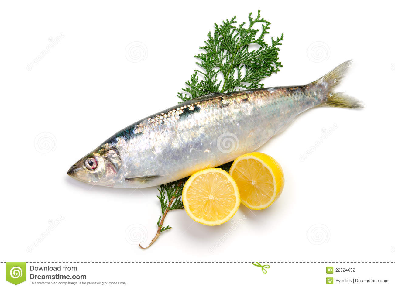 Pacific Herring Stock Photography - Image: 22524692