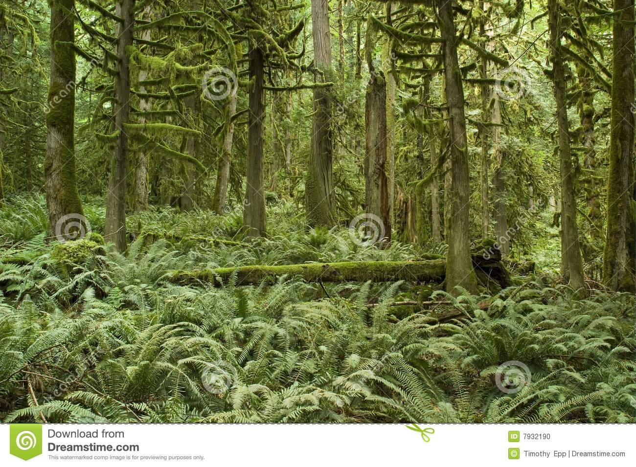 pacific northwest forest - photo #22