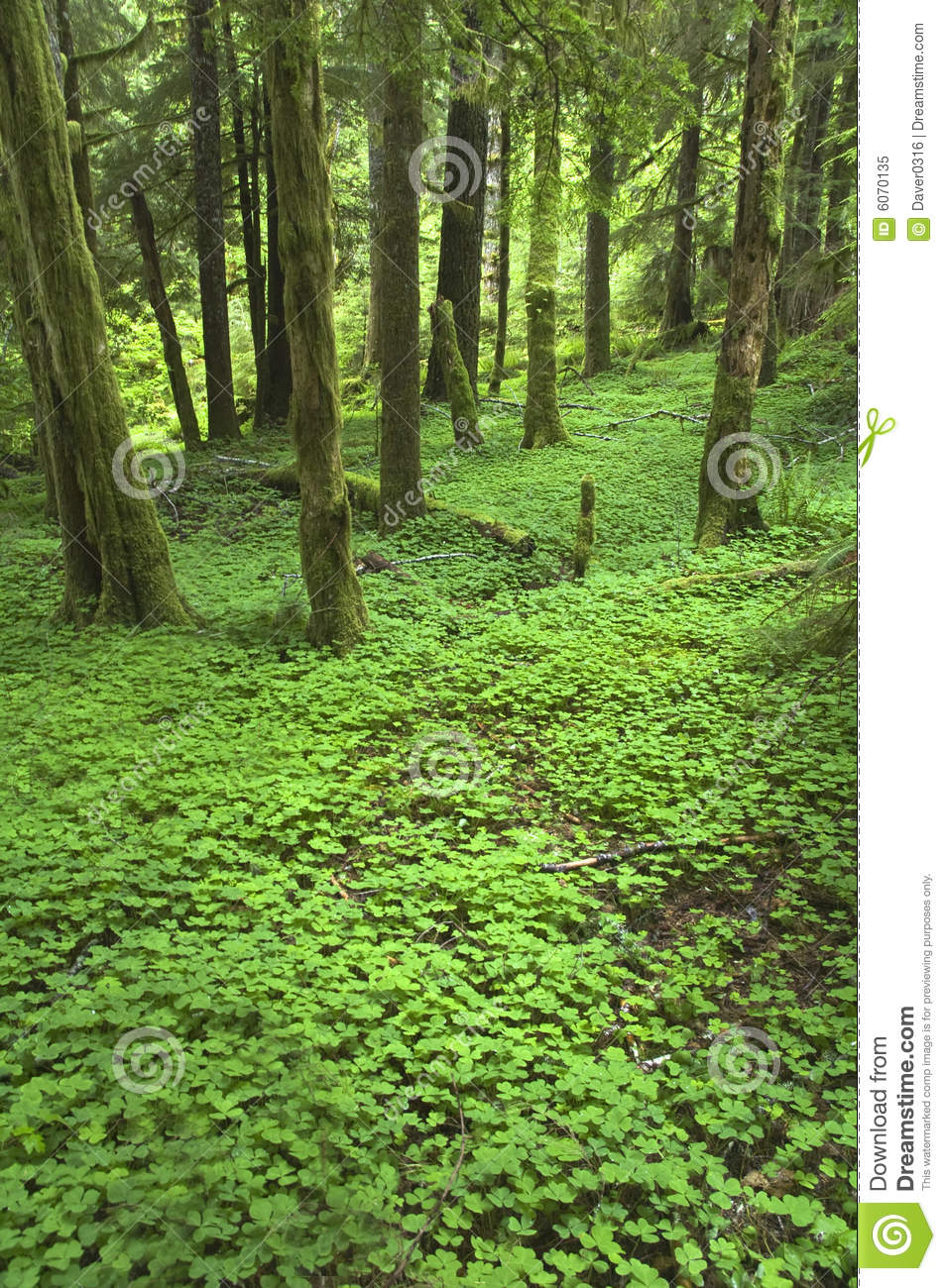 Pacific northwest forest floor stock image image of rain for Northwest flooring