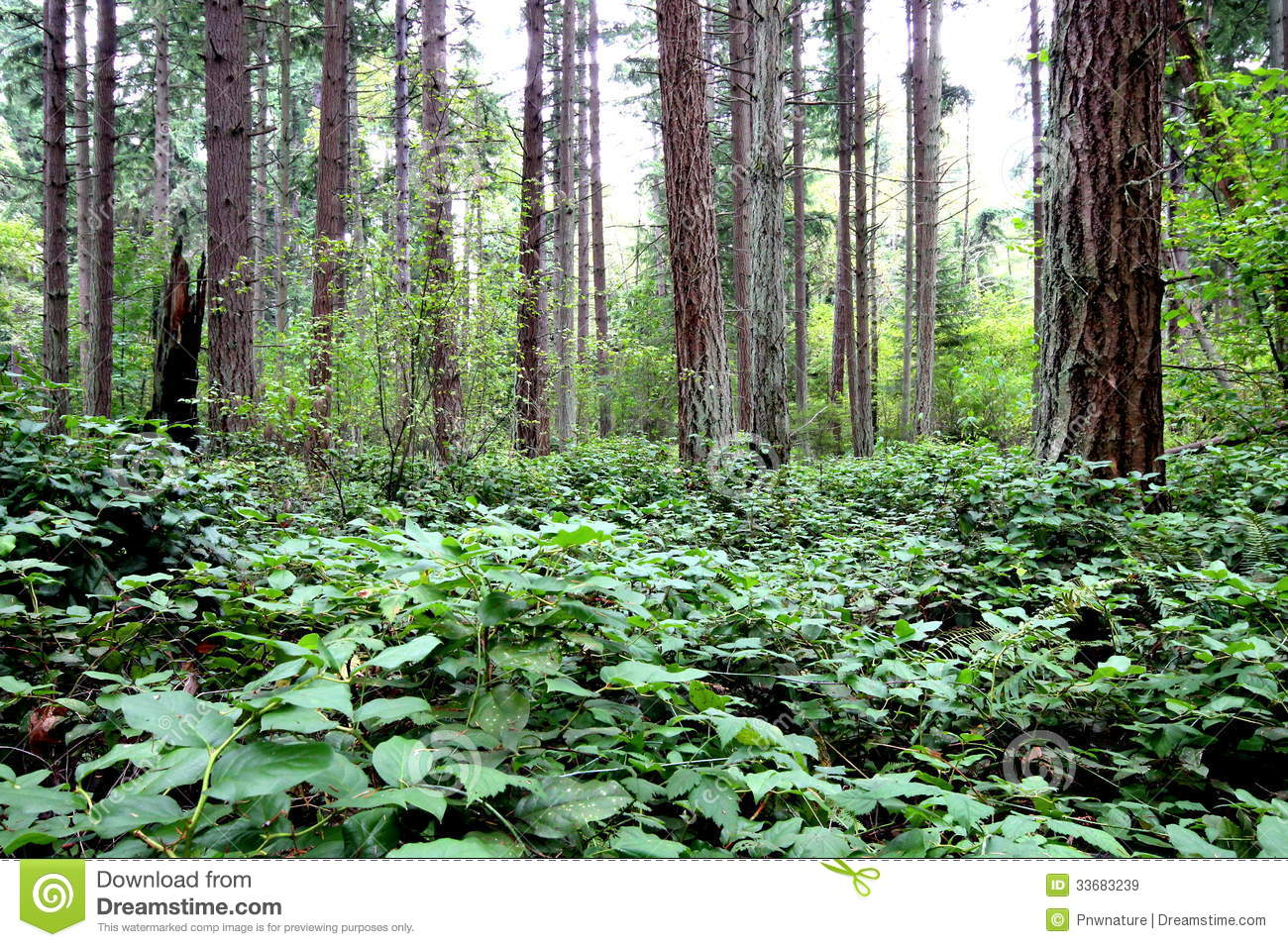 pacific northwest forest - photo #23