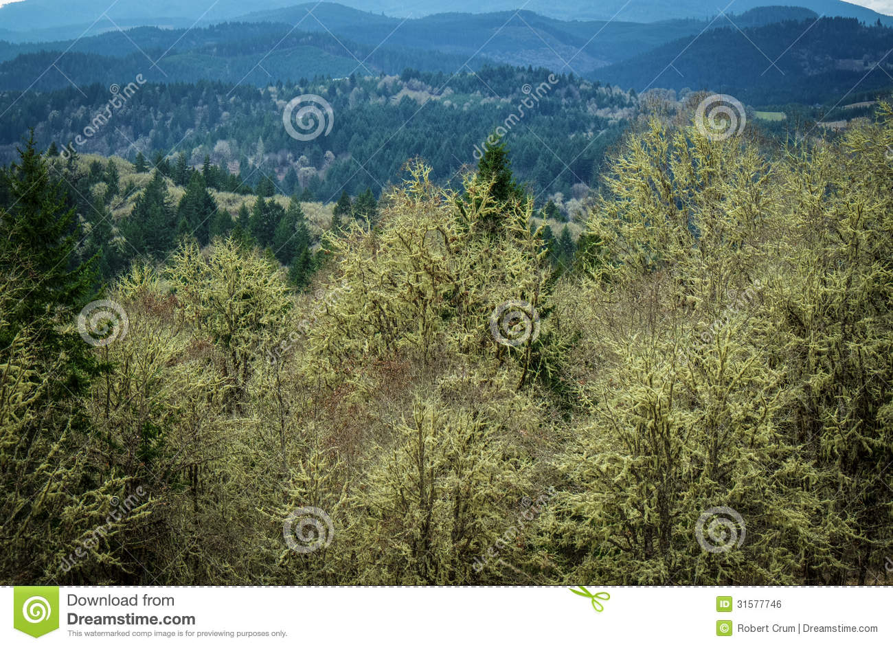 pacific northwest forest - photo #38