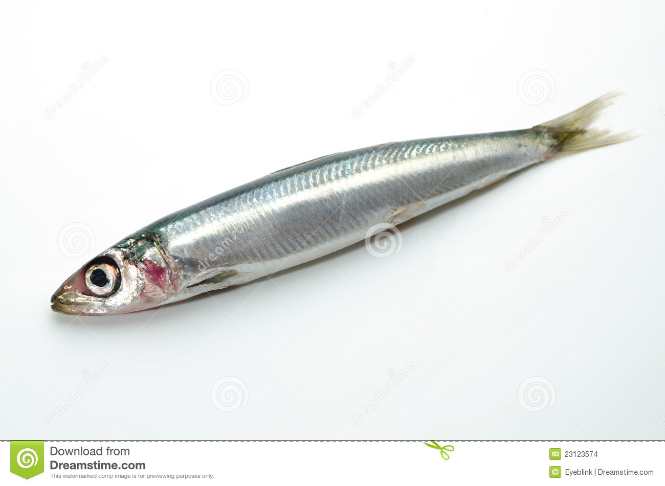 Pacific Round Herring Stock Images - Image: 23123574