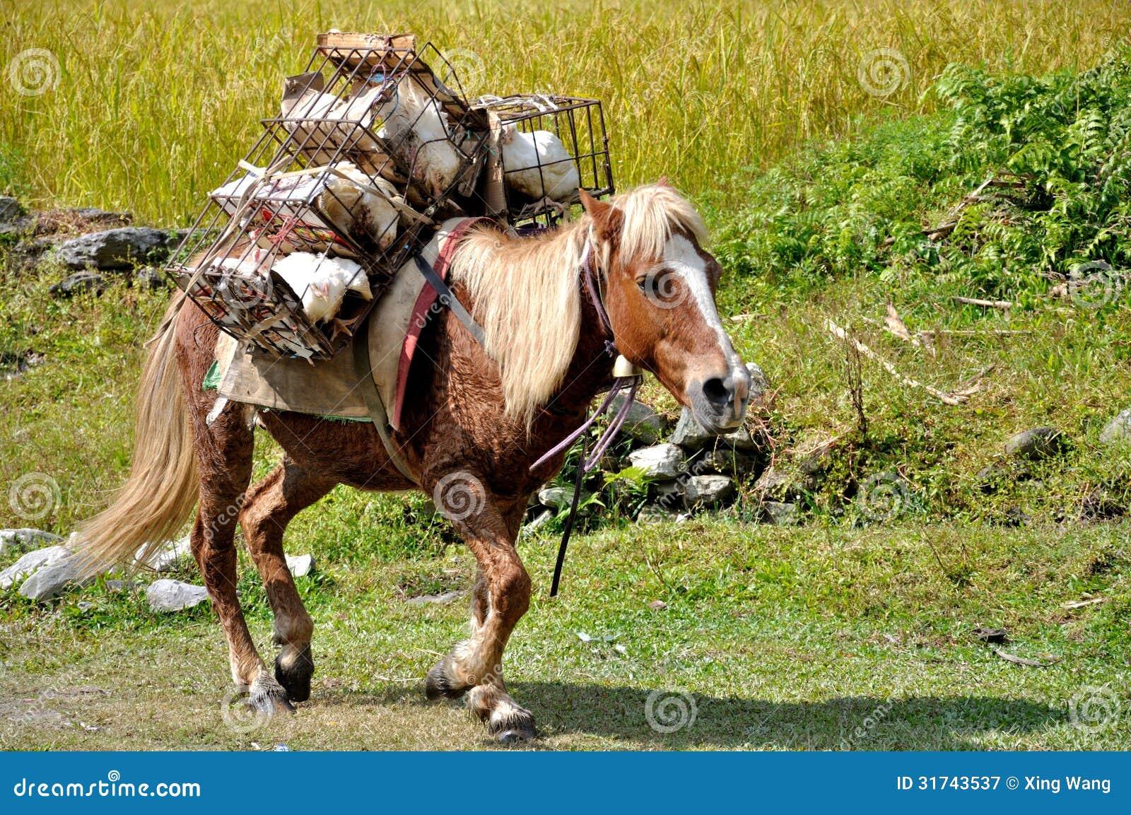 pony ride clipart