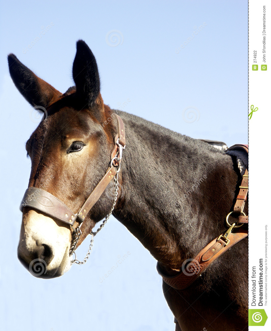 Pack Mule Stock Photography - Image: 274922