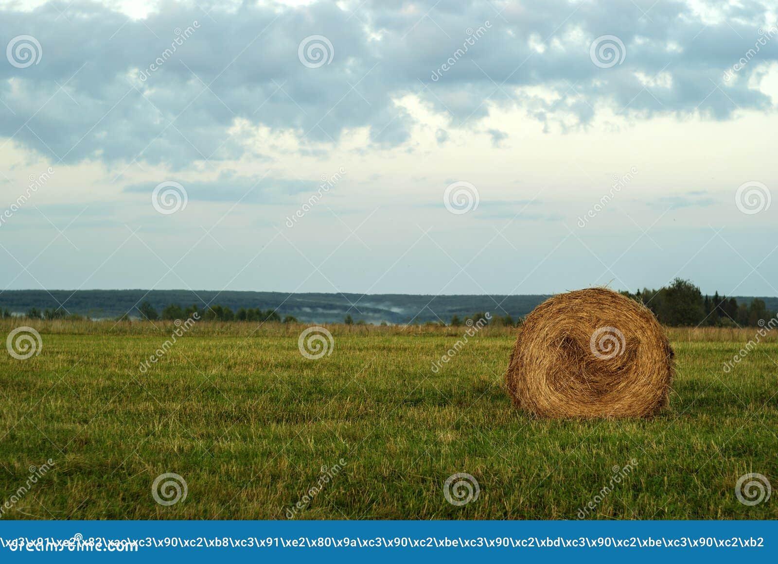 Pacote redondo do feno em um prado chanfrado