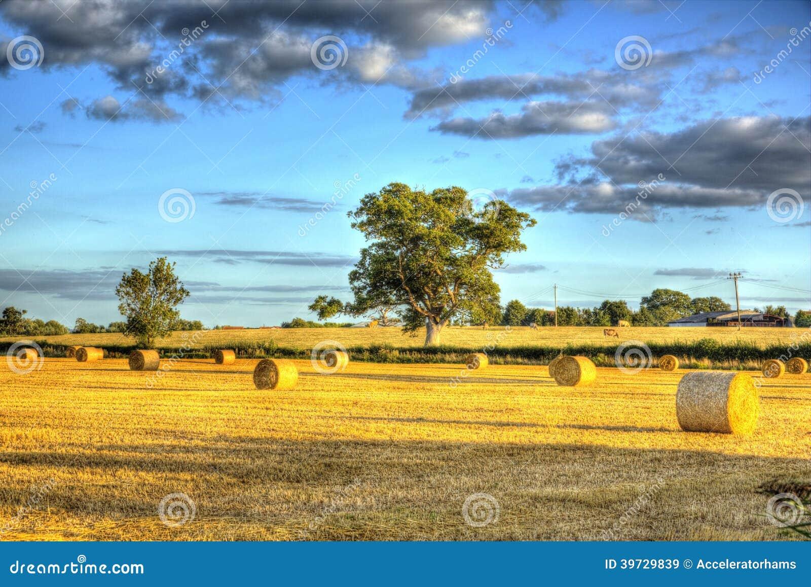 Pacotes de feno ingleses da cena do país no tempo de colheita em HDR