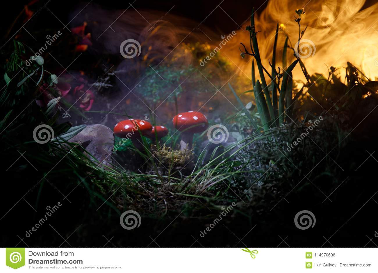 Paddestoel Fantasie Gloeiende Paddestoelen in geheimzinnigheid donker bosclose-up Amanietmuscaria, Vliegplaatzwam in mos in bos M