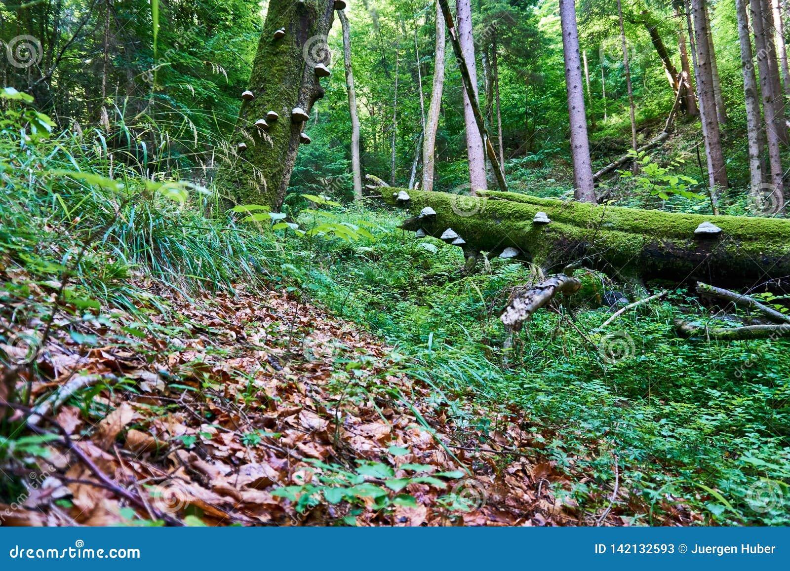 Paddestoel het groeien op een boom in het hout