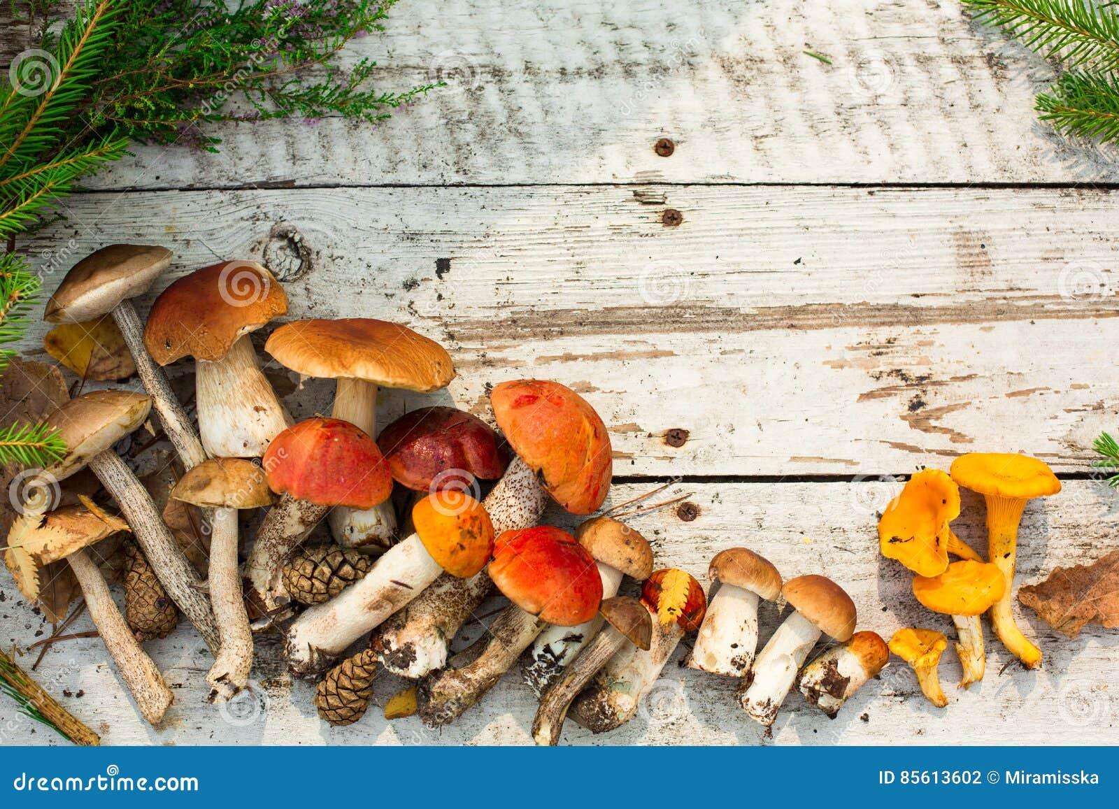 Paddestoelen in boskaart op de herfst of zomer Bosoogstboleet, esp, cantharellen, bladeren, knoppen, bessen, Hoogste mening