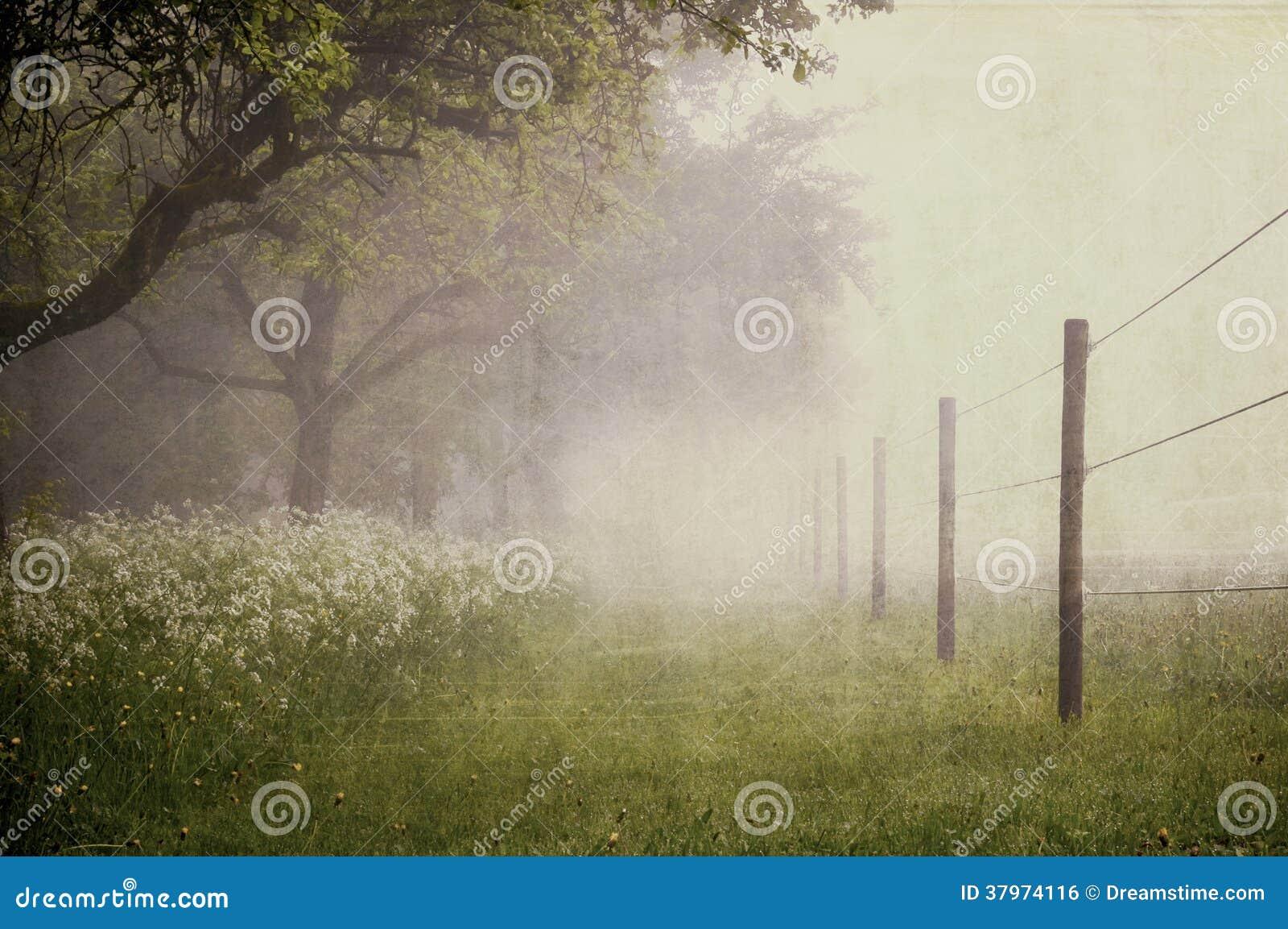 Paddock with fog