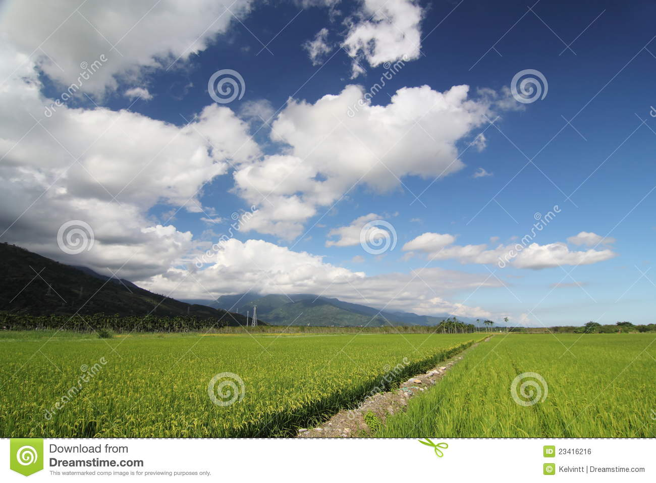 Paddy Field with Blue Sky 02
