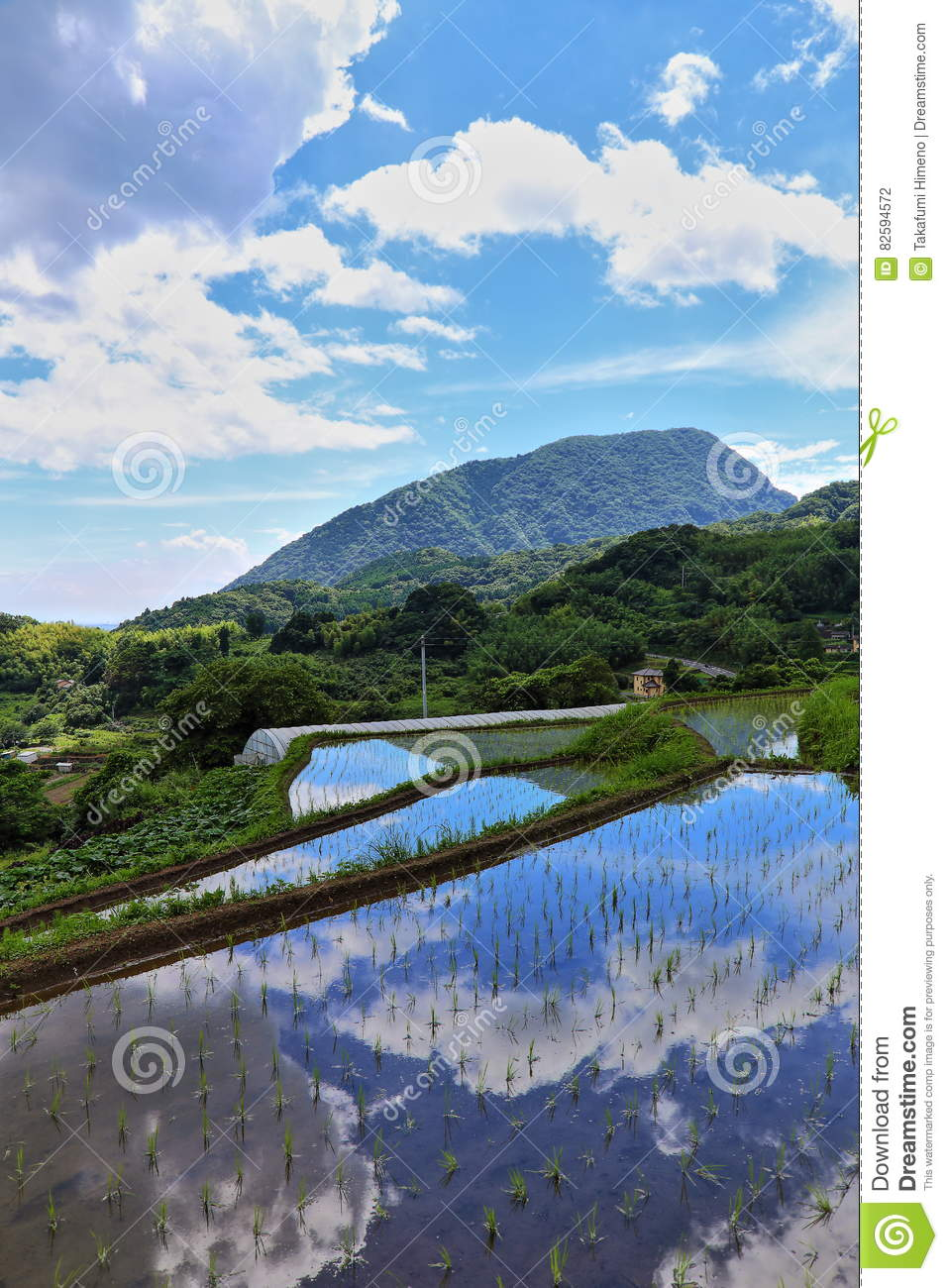 Paddy field and blue sky