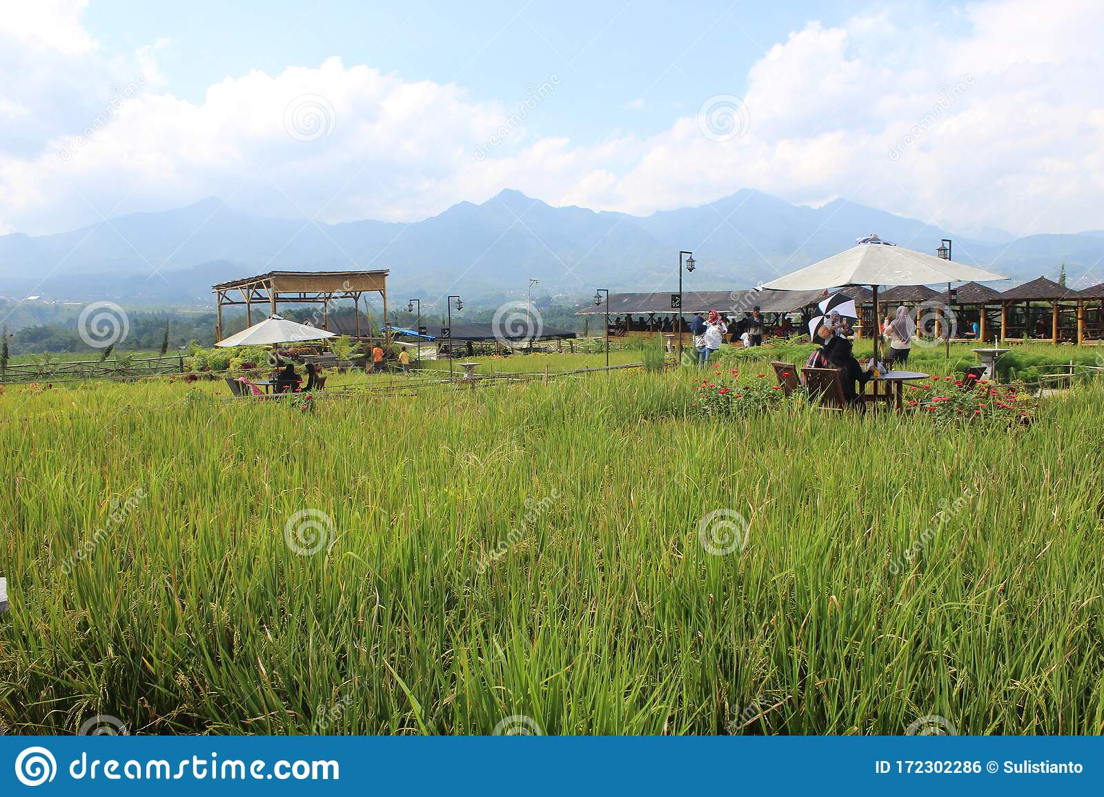 Paddy Field Cafe Tour In Pujon Malang District East Java Indonesia Editorial Photo Image Of Explore Fields 172302286